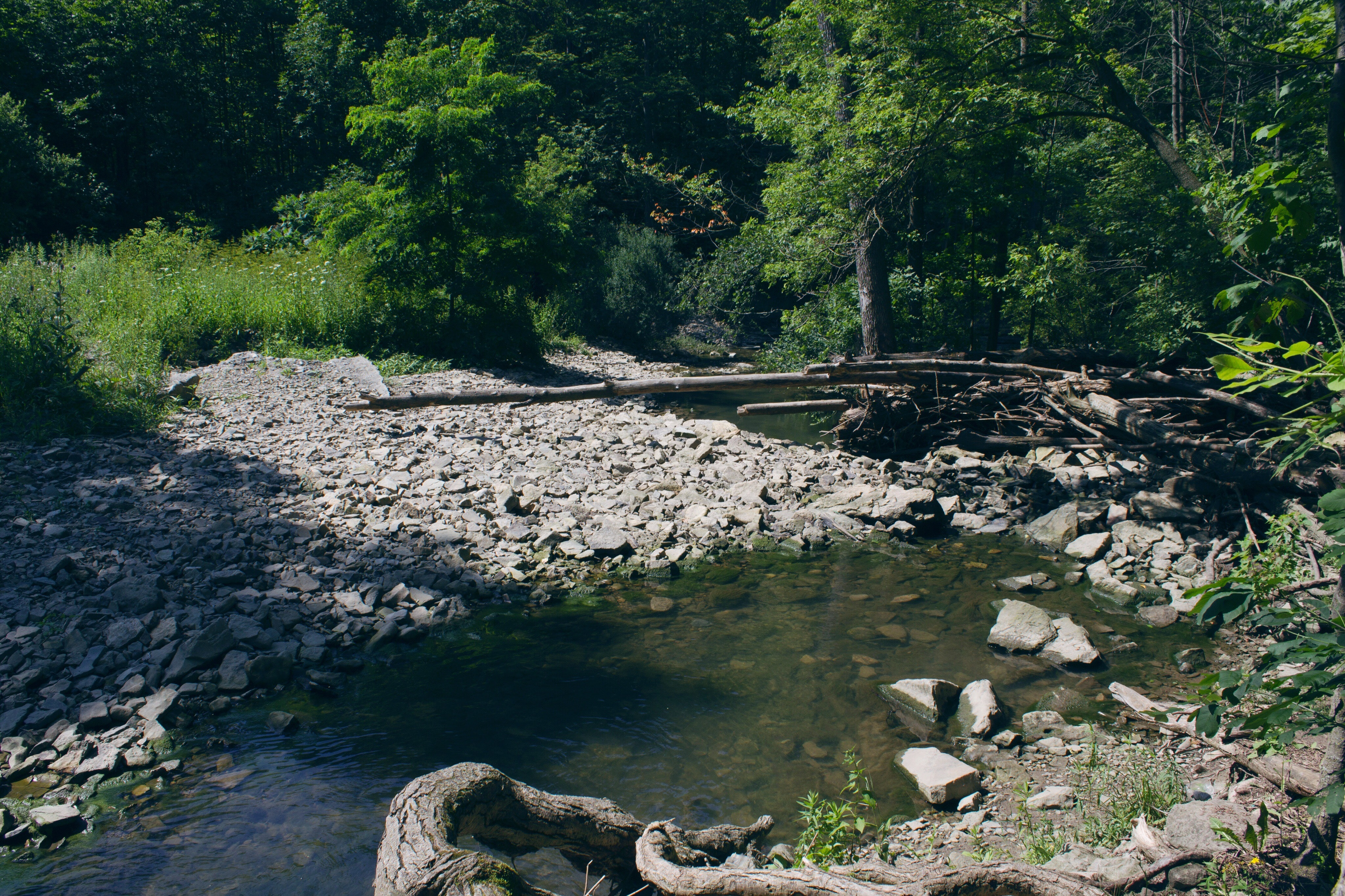 Stream between forest photo