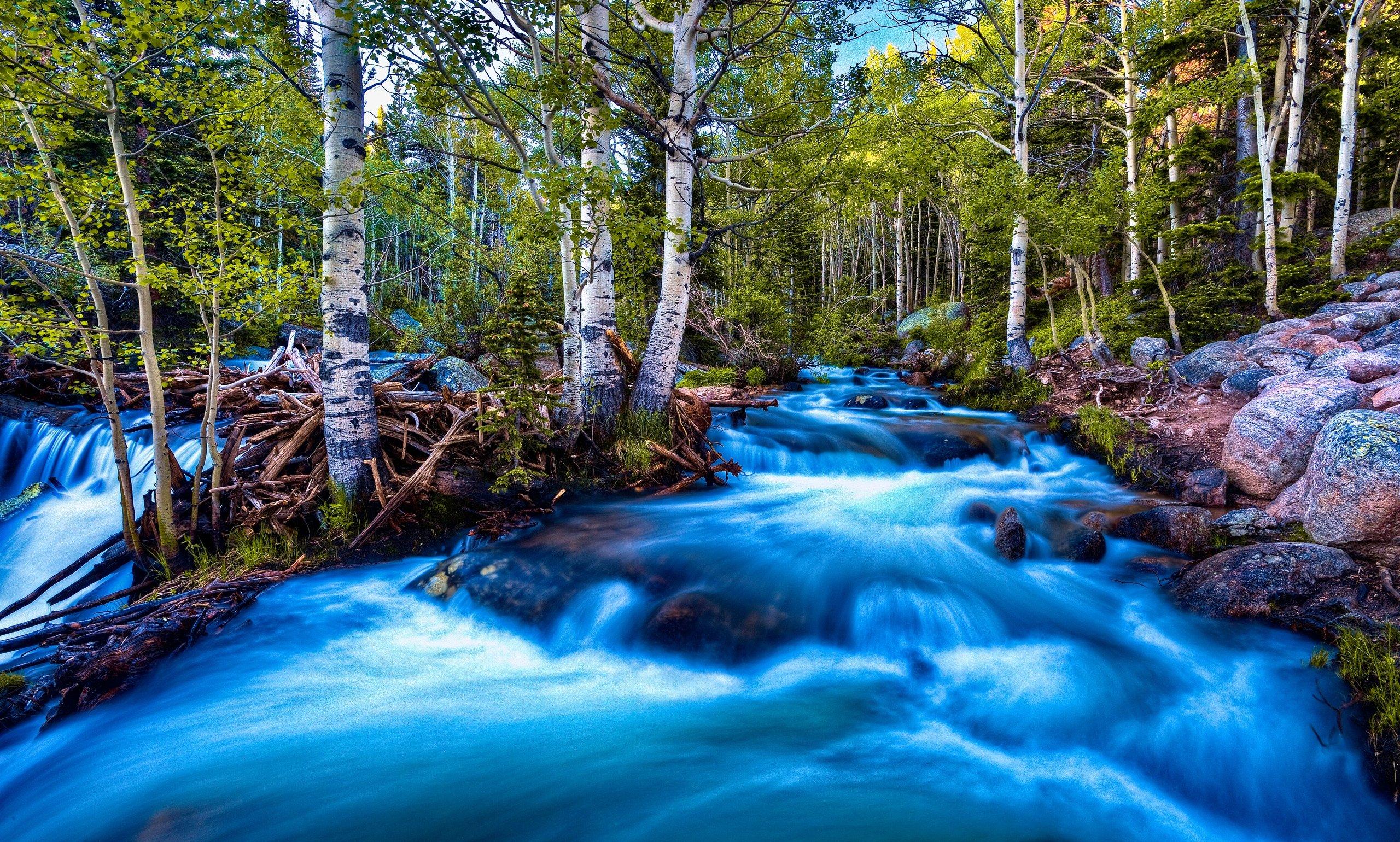 Forest Birch Stream Long Exposure - WallDevil