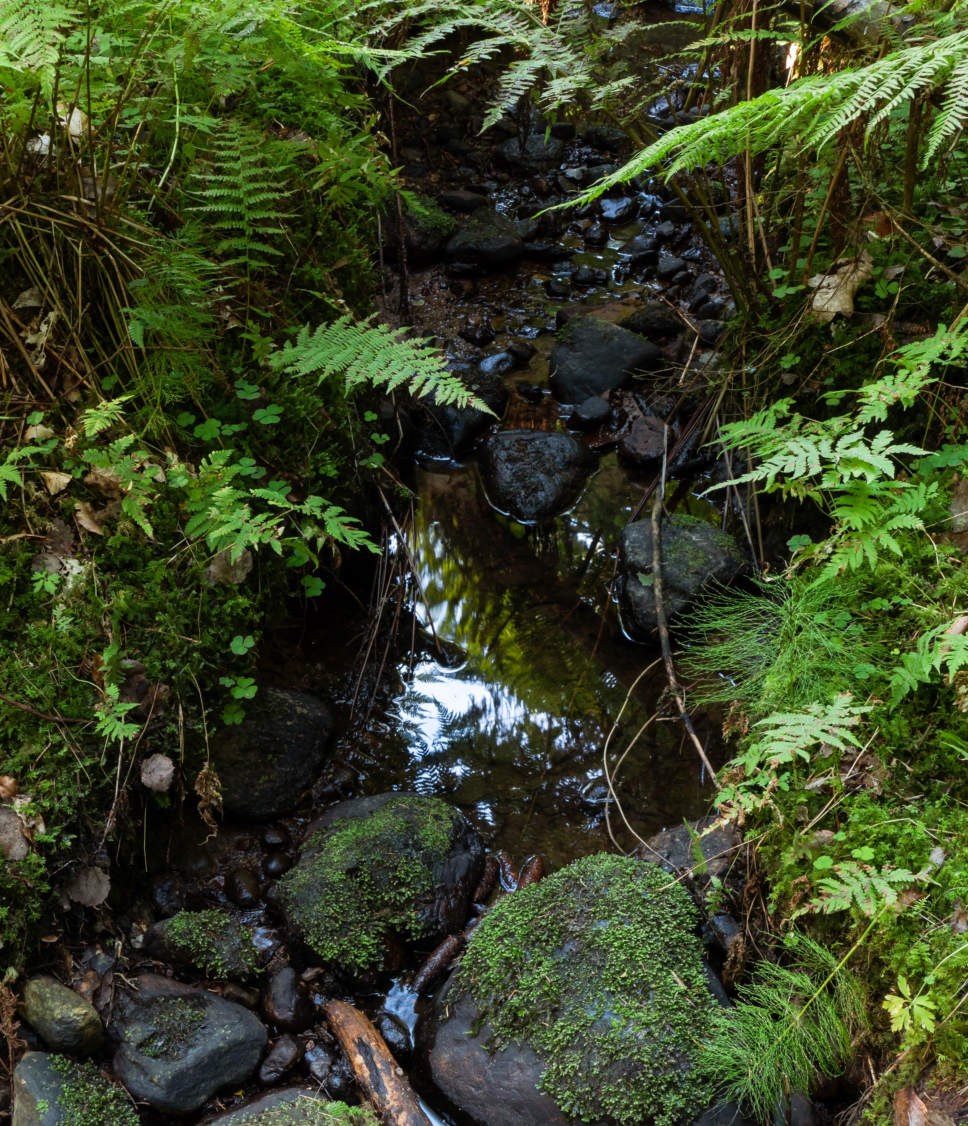 Stream in gullmarsskogen ravine photo