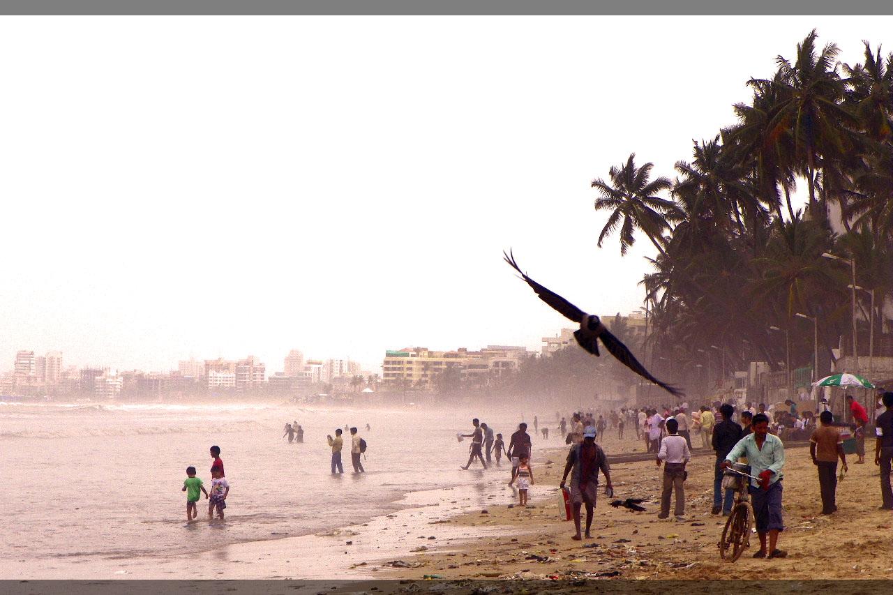 Summer Beach, Beach, Bird, Leisure, People, HQ Photo