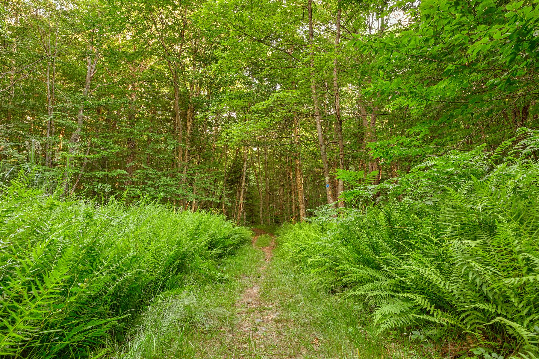 Summer fern trail - hdr photo