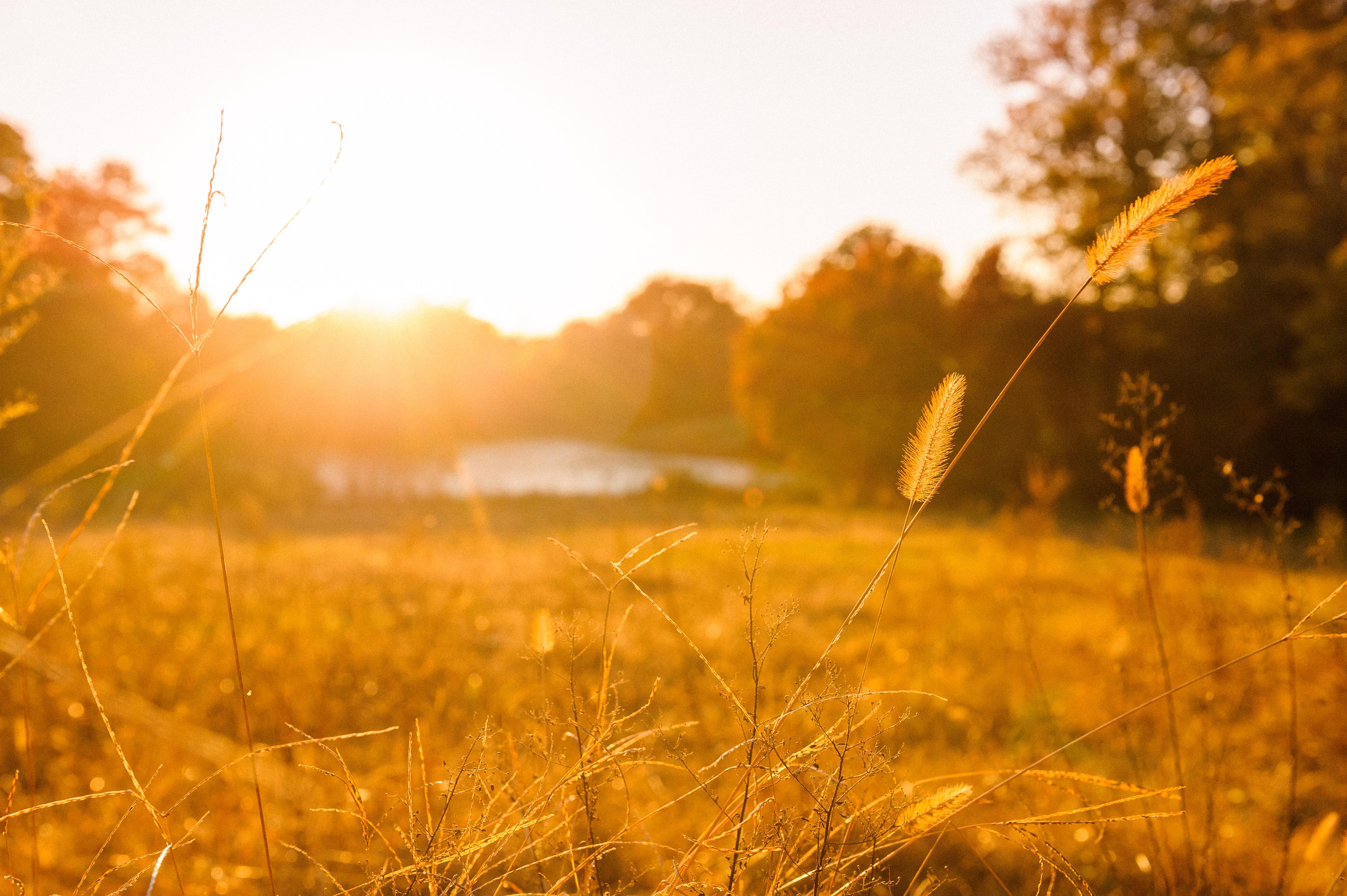 Summer field photo