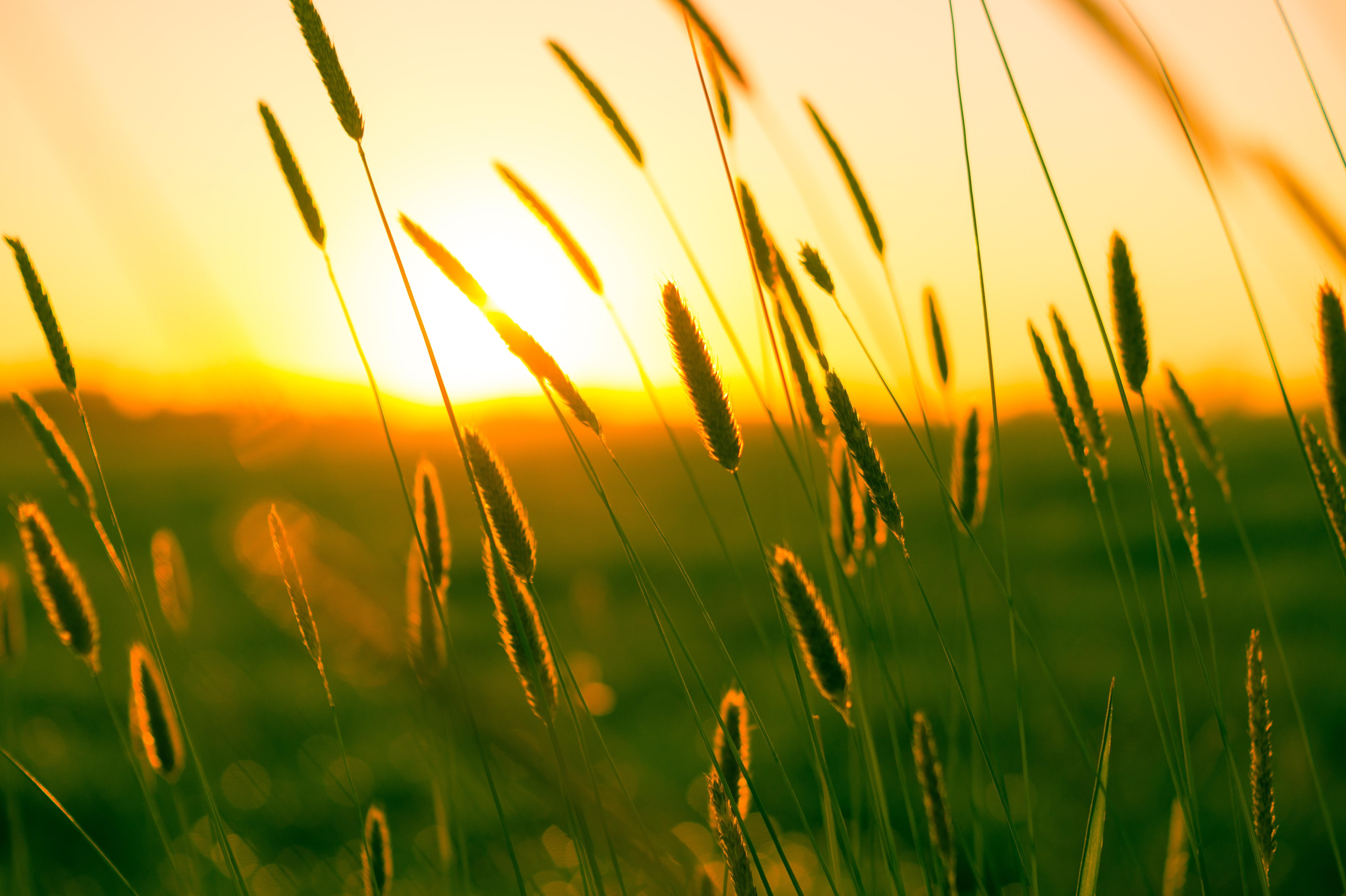 Free stock photo of field, meadow, summer