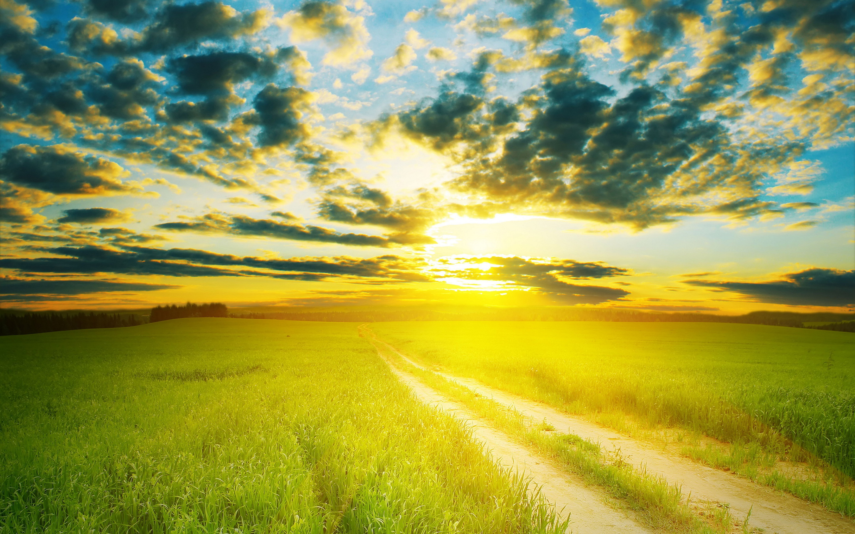 Summer sunshine #7028204