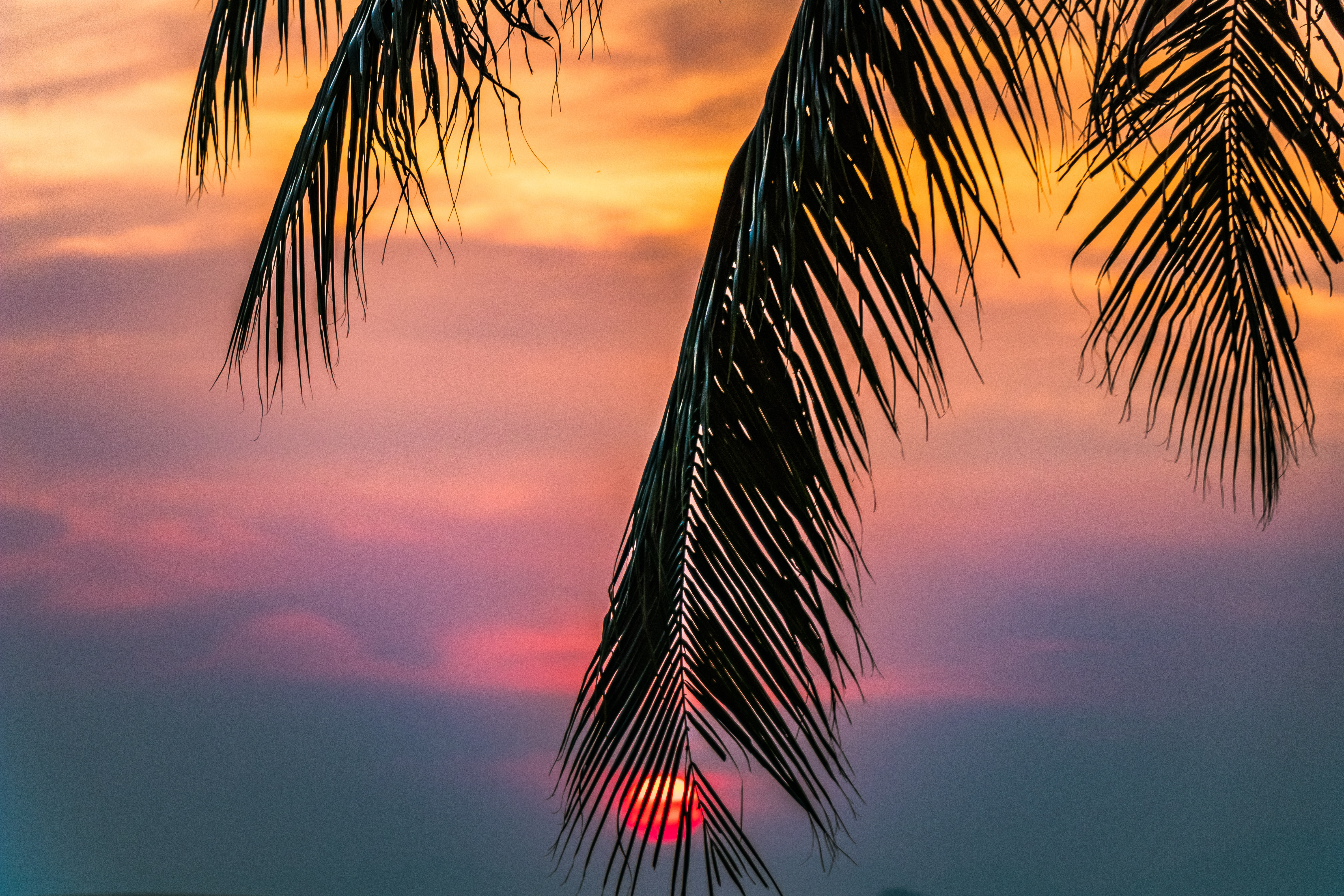 Sun covered with coconut tree during sunrise photo