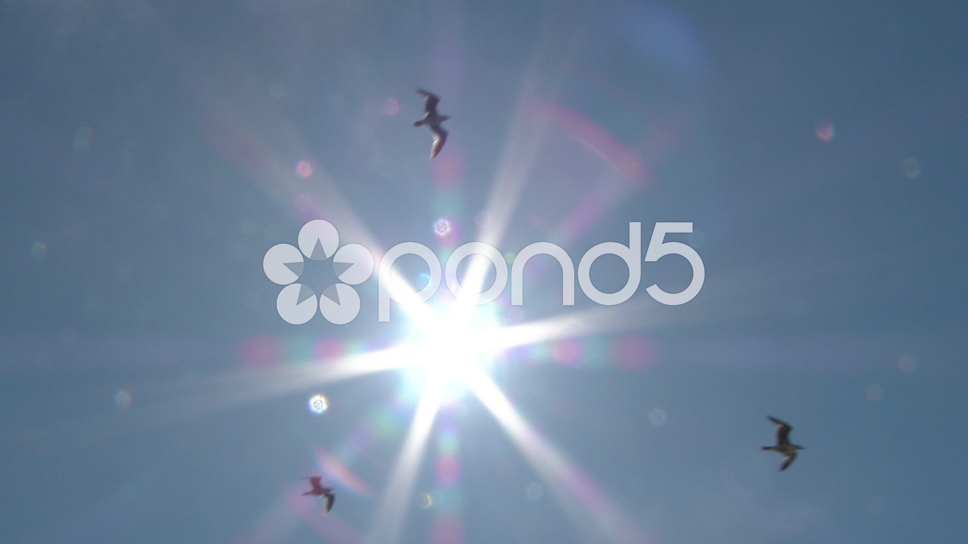 Birds Flying Through Sun Flare ~ Hi Res Video #50714201