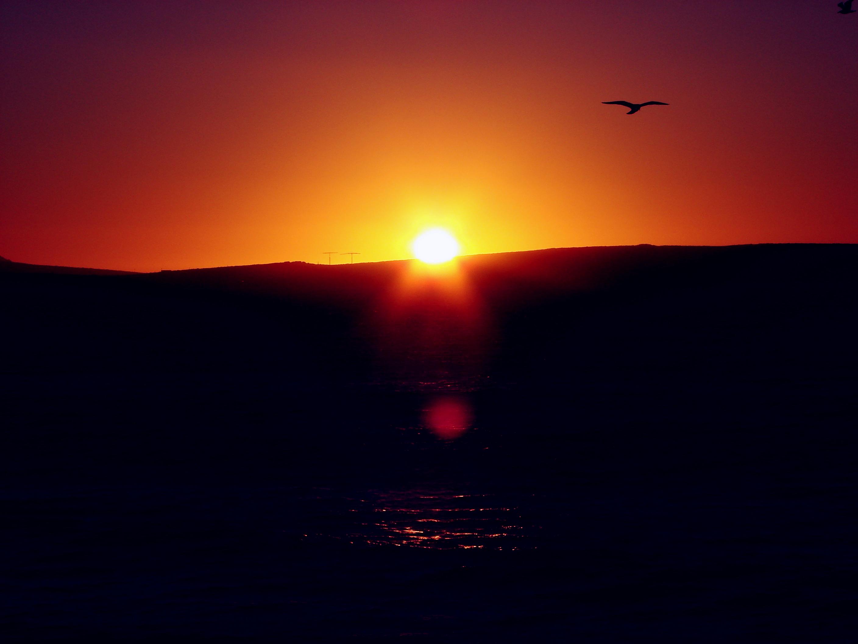 Sun Flare Bird, Bird, Dark, Flare, Glow, HQ Photo