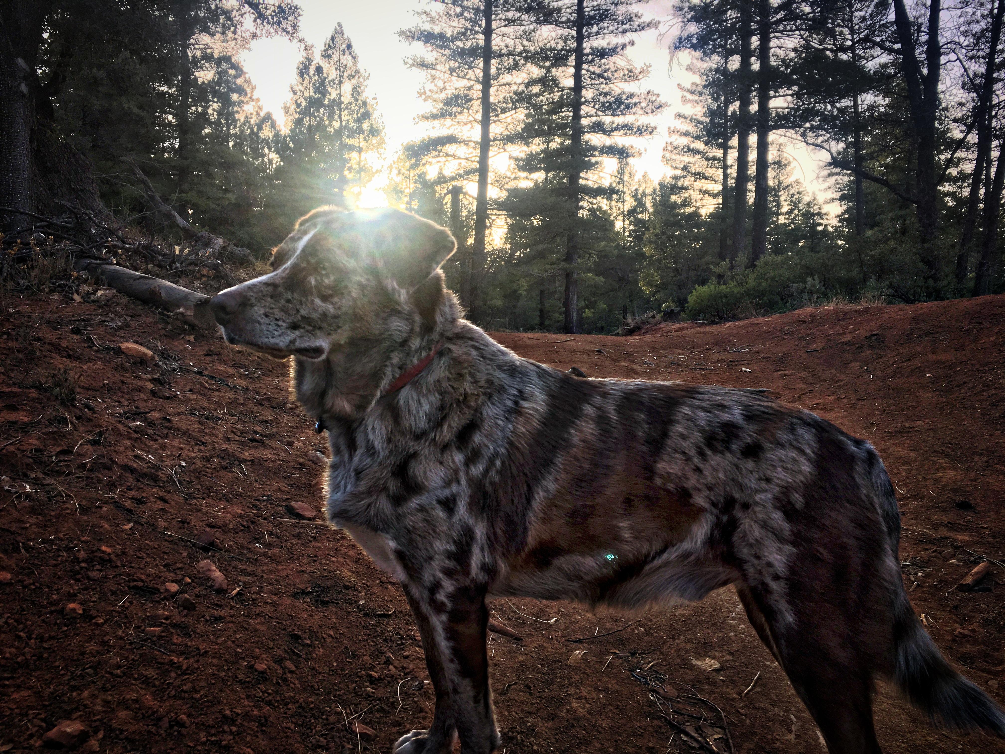 Sun on dog photo