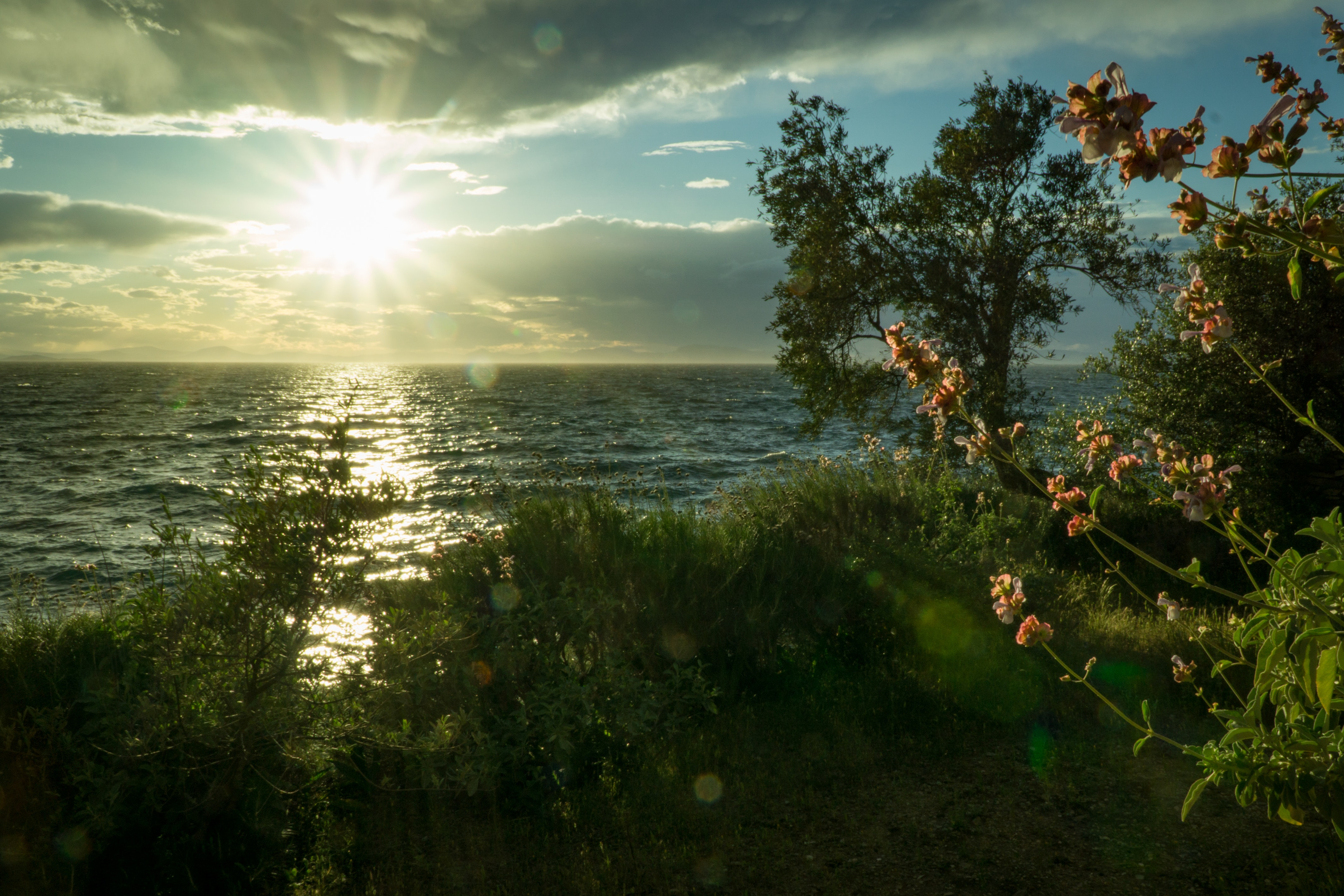 Sun ray hitting body of water green grass trees white clouds during sunrise photo