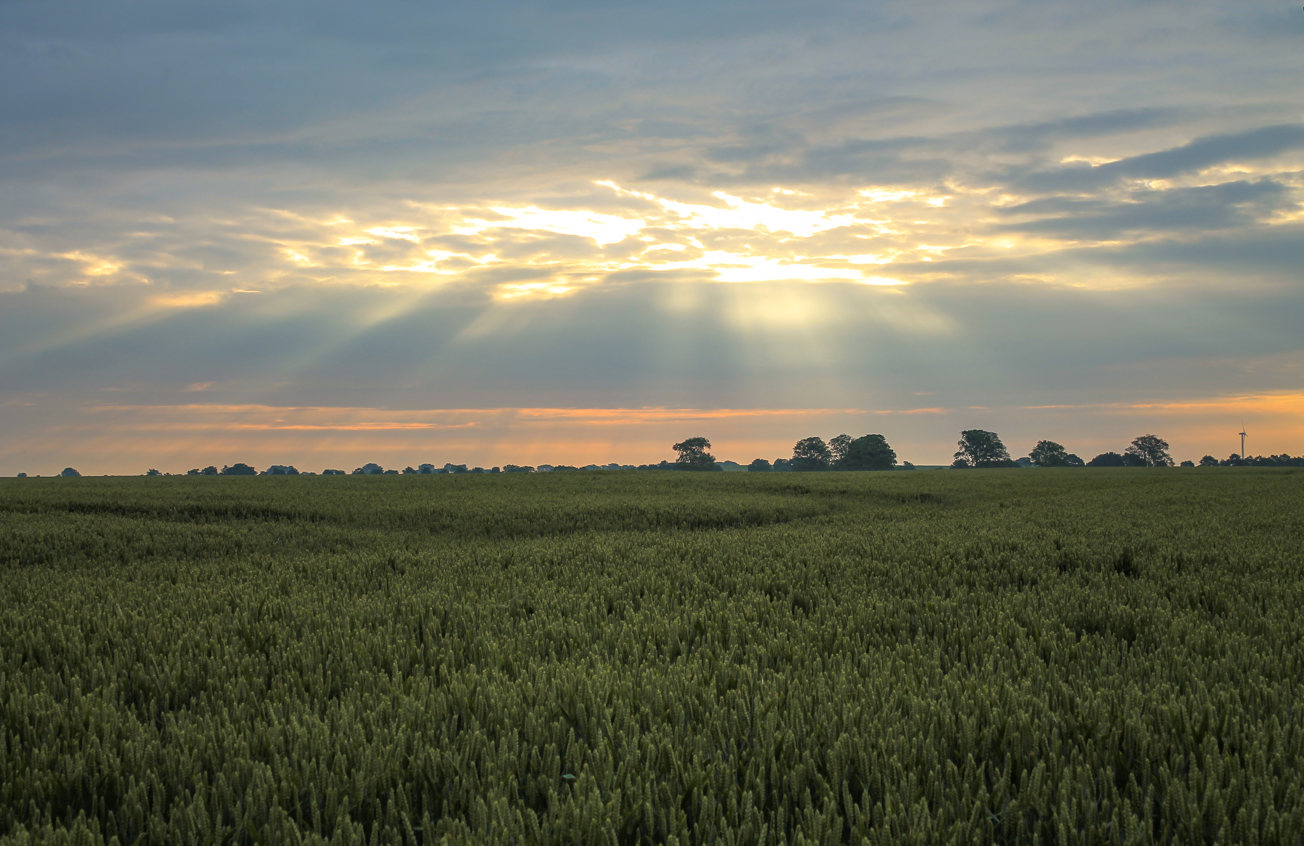Sun shining through the clouds over a green wheat field photo