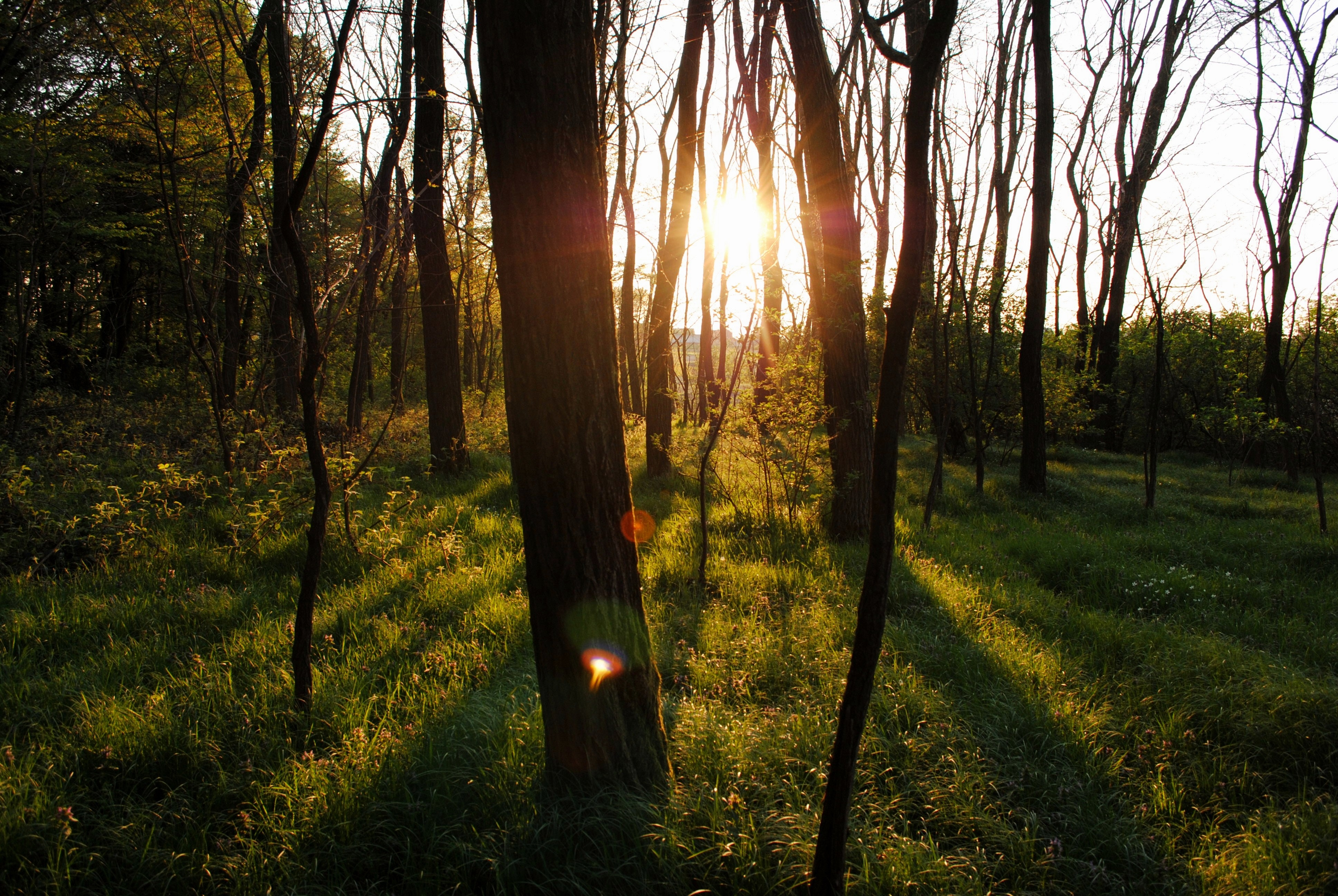 Sun shining through trees in forest photo