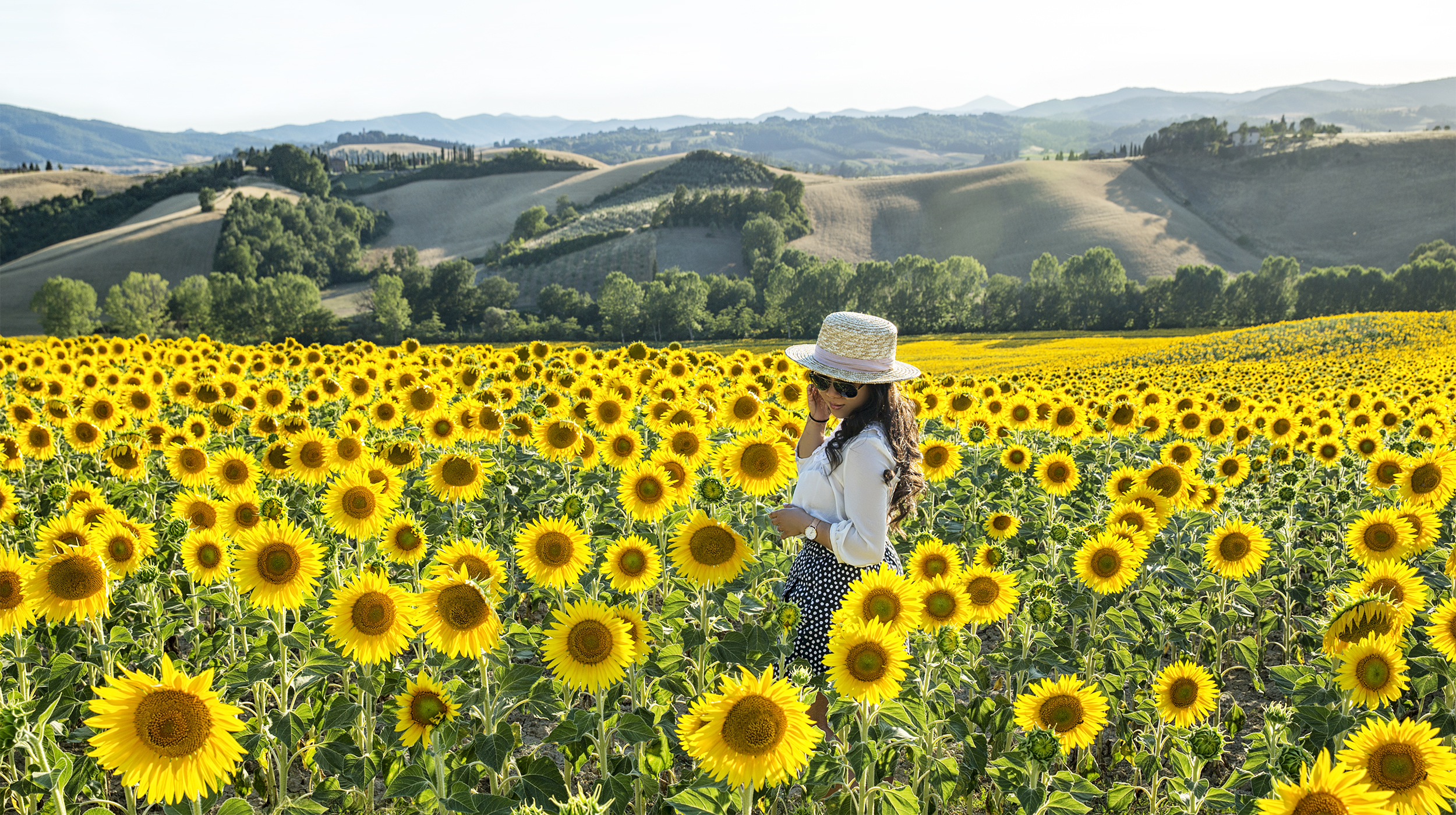 Sunflower fields in Tuscany: Where to find them 2017