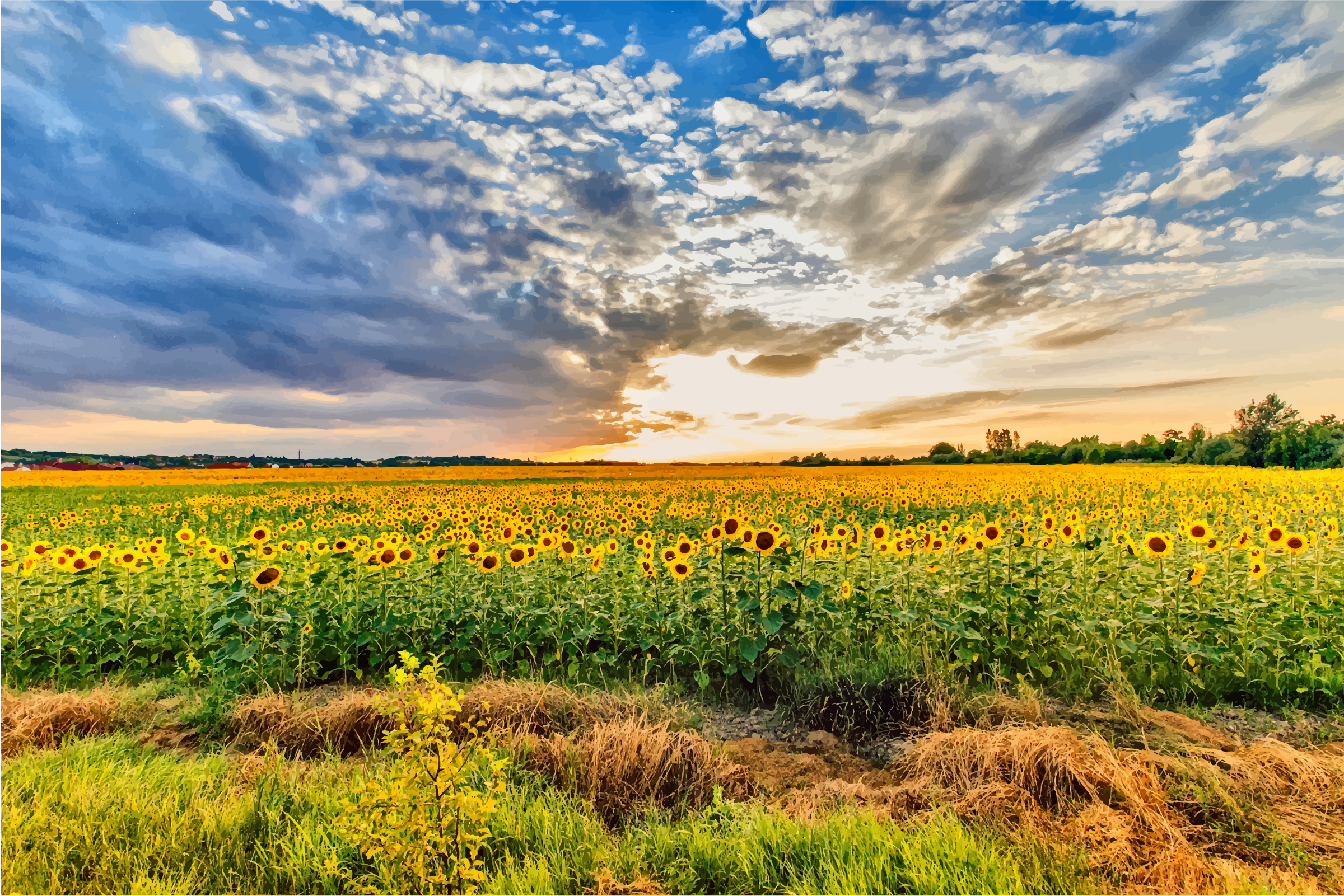 Sunflower Field Hungary Icons PNG - Free PNG and Icons Downloads