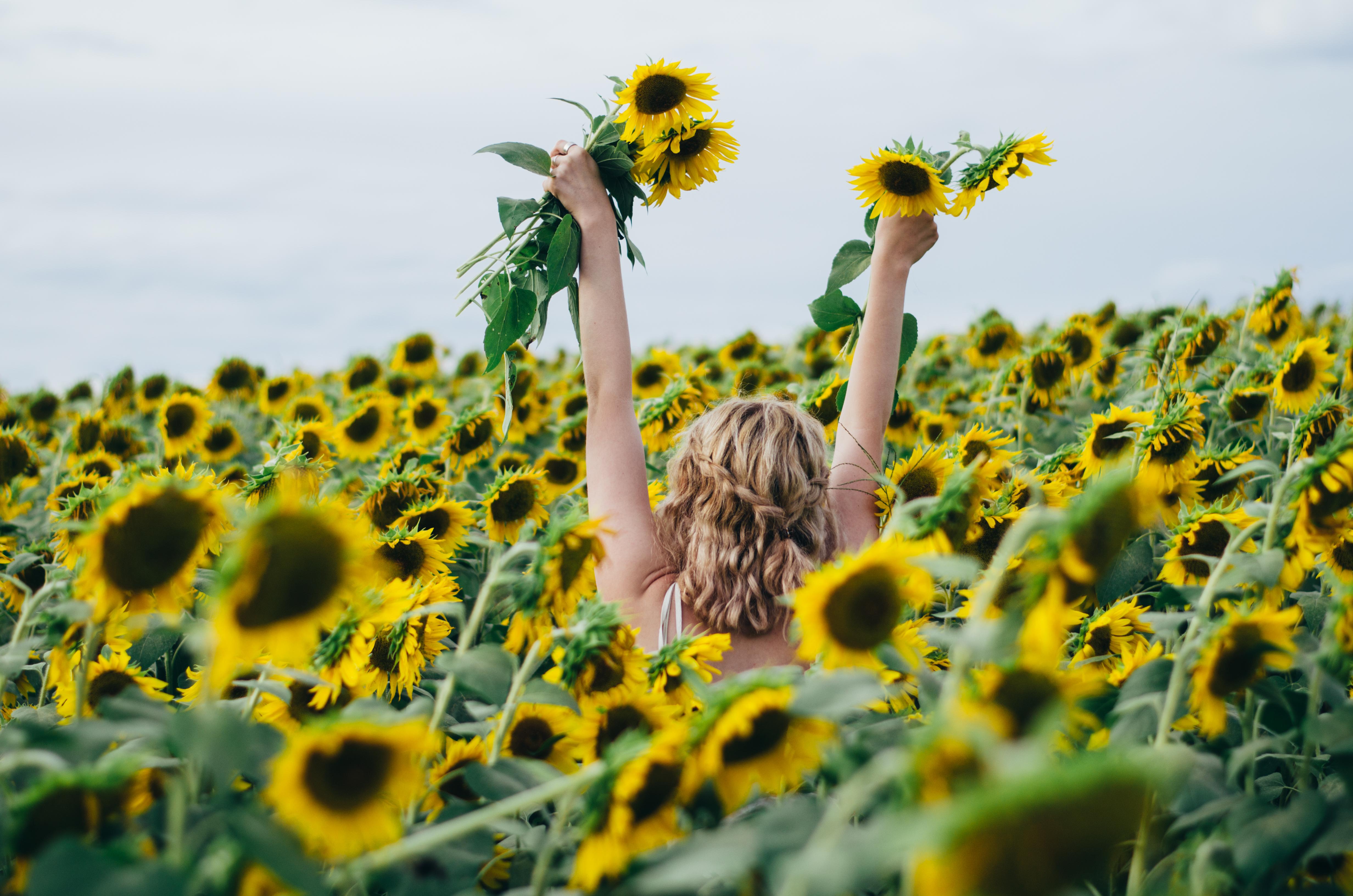 Sunflower Fields Forever | Juliette Laura