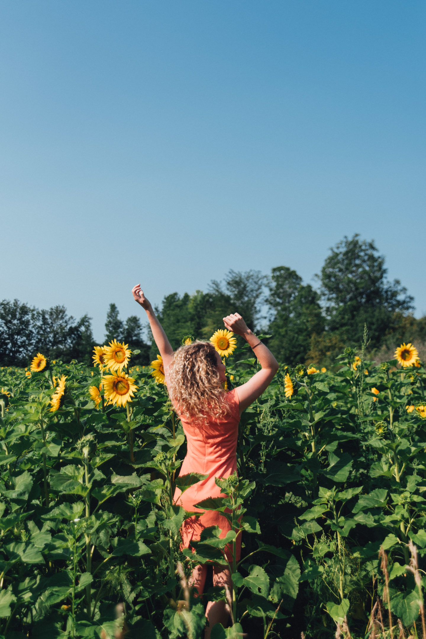 Finding a Summer Sunflower Field — Lindsay Emma