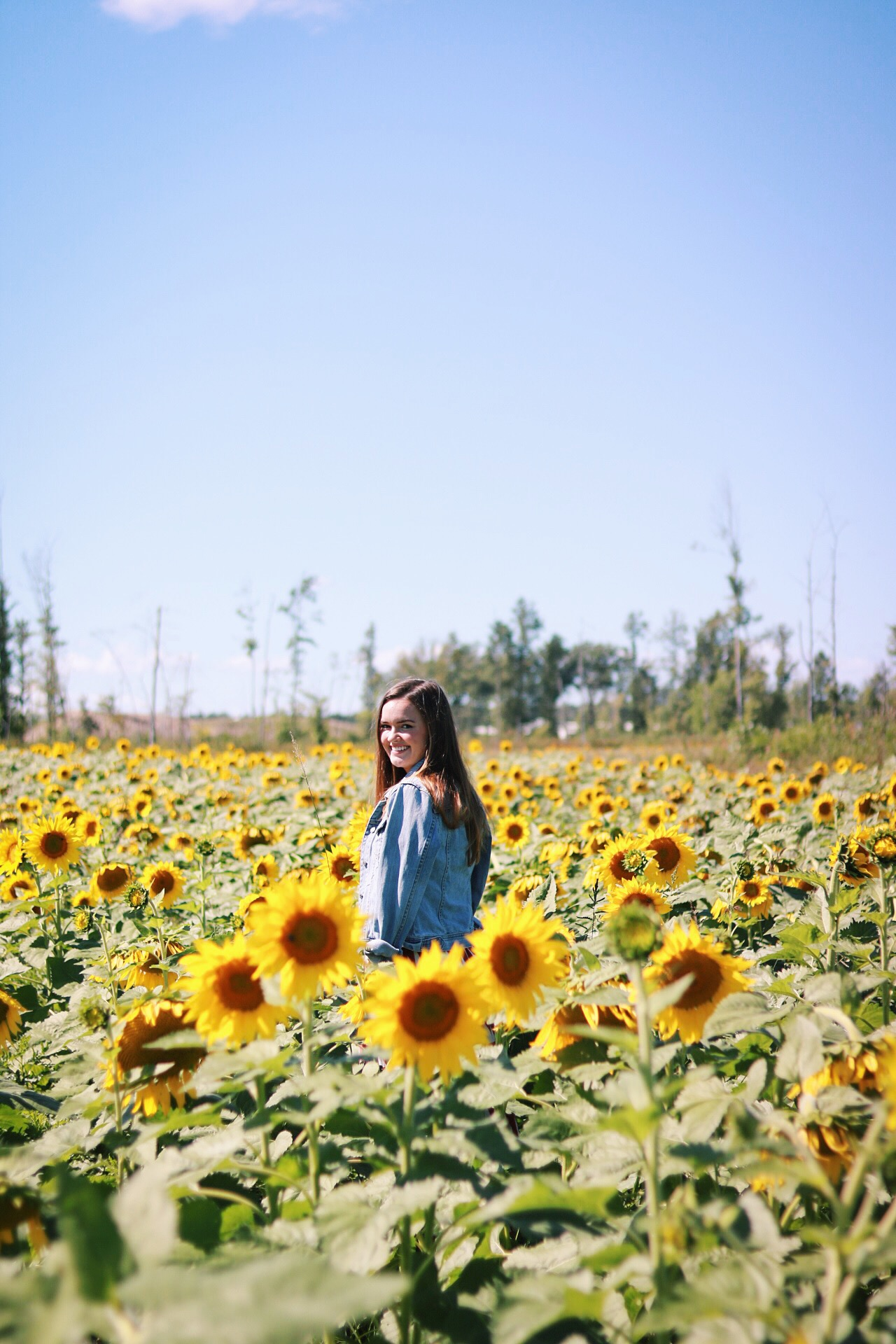 Sundays at Cleveland's Sunflower Fields (Prayers from Maria)
