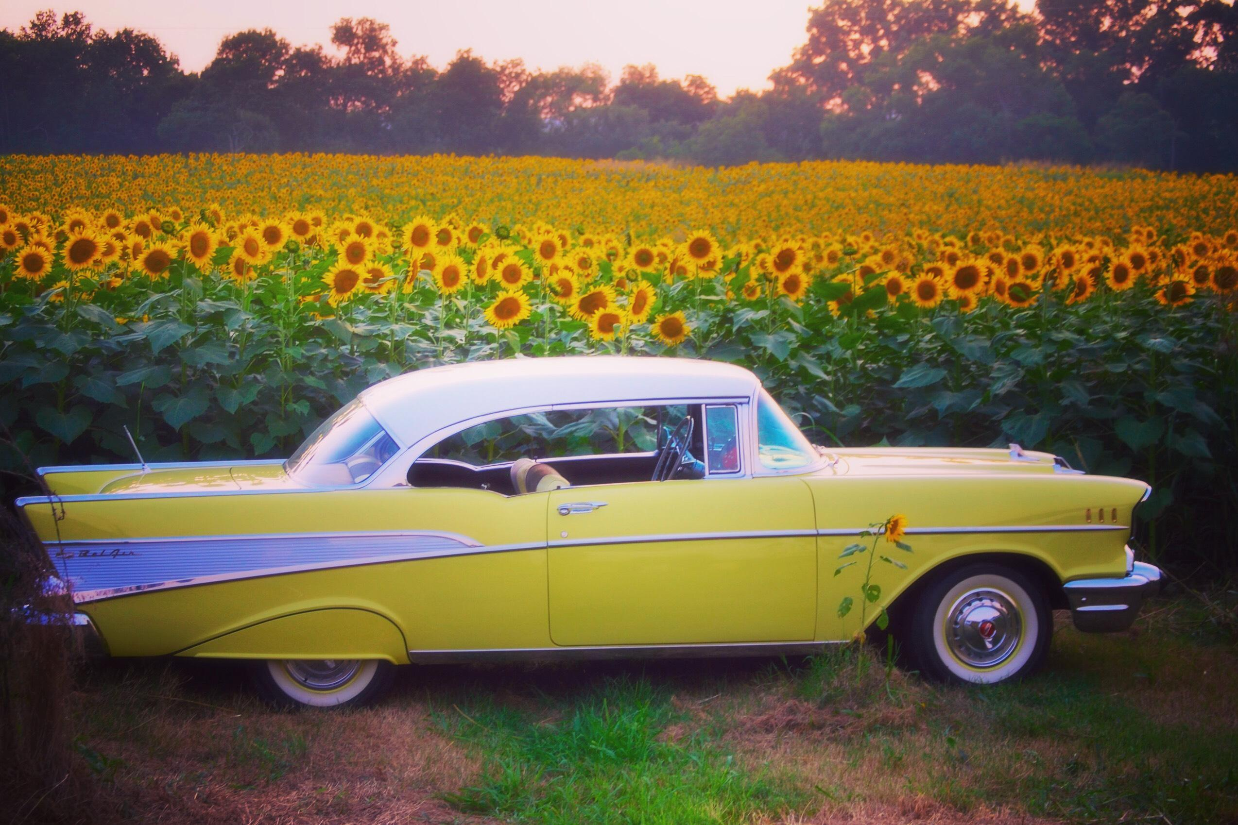 Photo of the Day: Ooltewah sunflower field