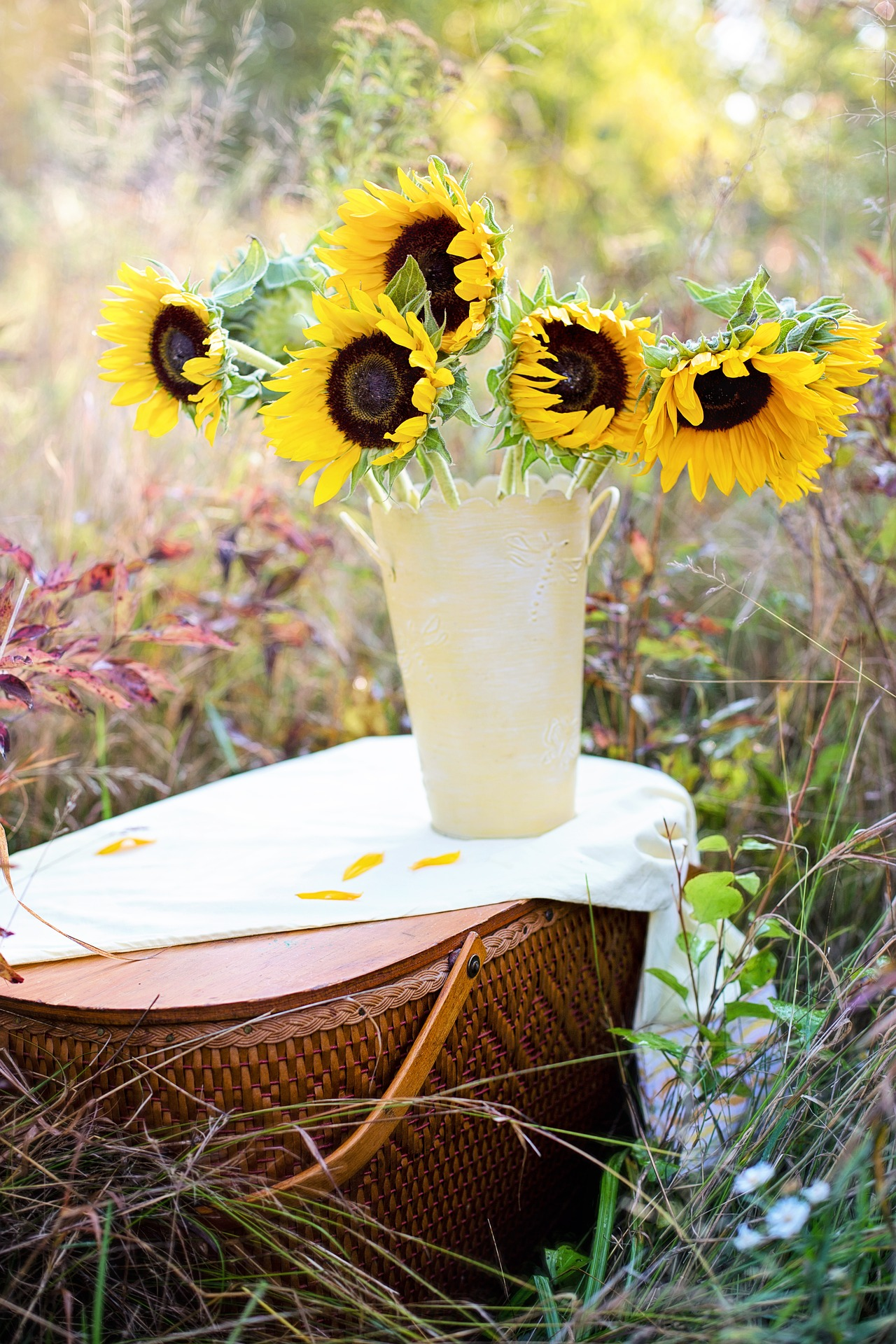 Sunflowers in the pot photo