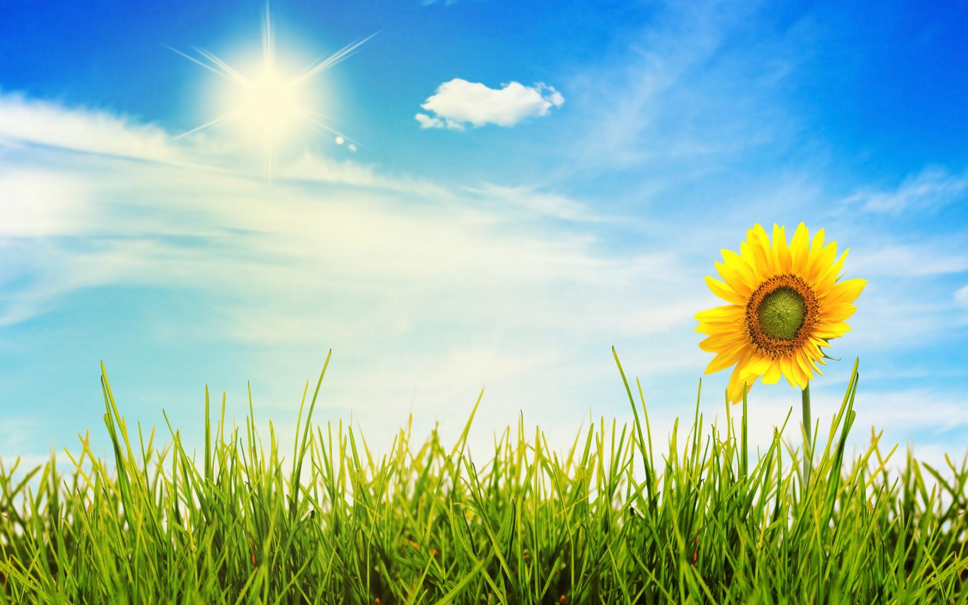 Sunny Day Best Wallpaper 25960 - Baltana