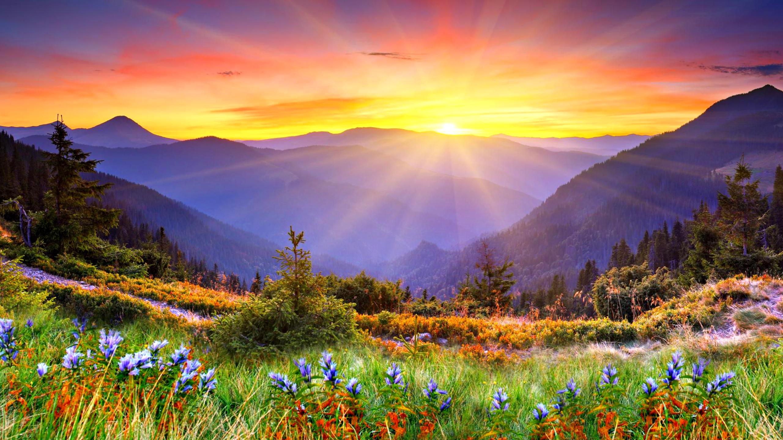 Nature & Landscape Beautiful Sun Rise wallpapers (Desktop, Phone ...