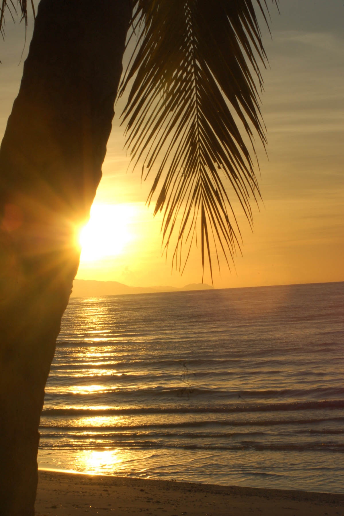 Sunrise, Beach, Bspo06, Coconut, Leaves, HQ Photo
