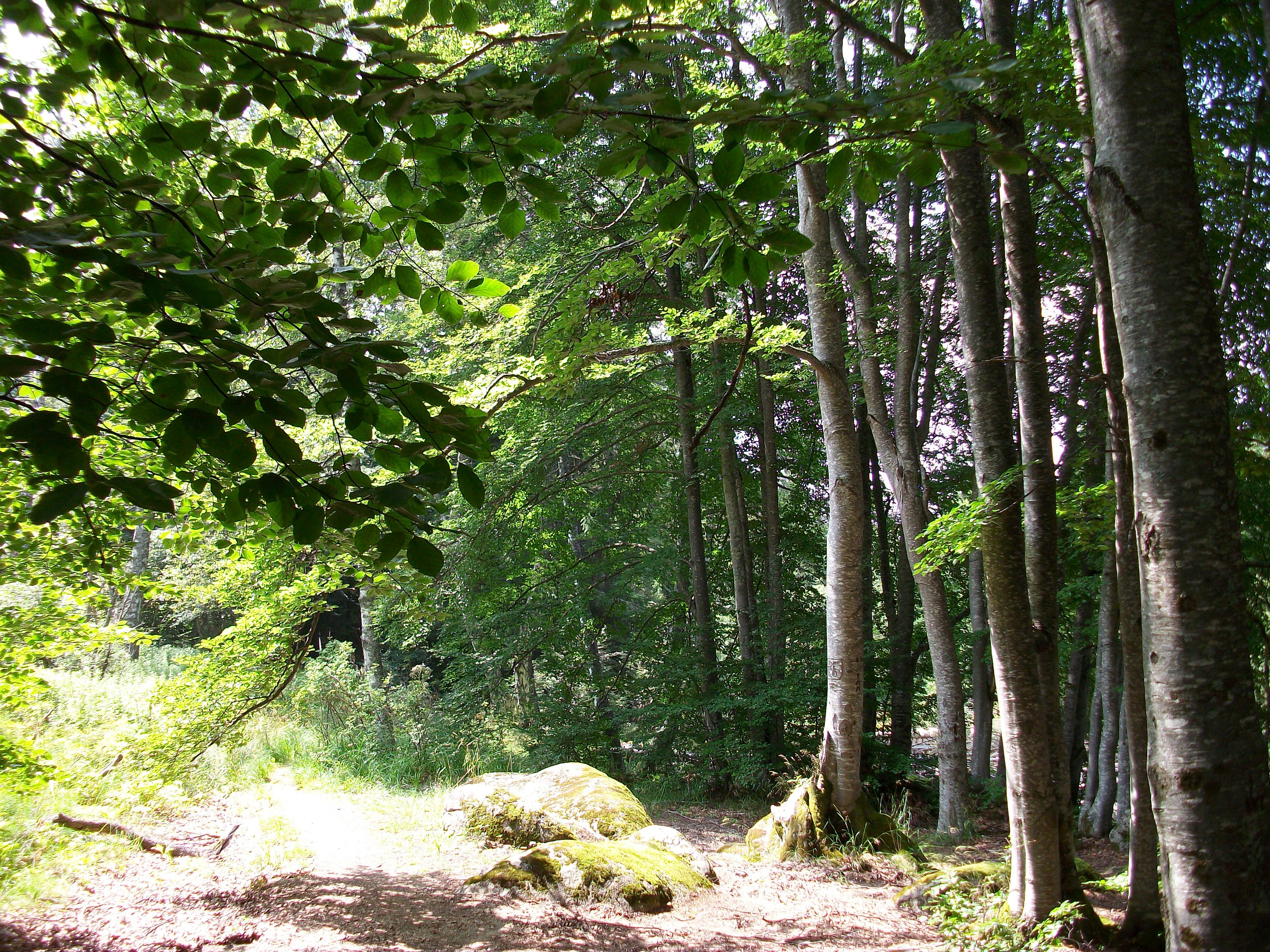 Sunrocks, vitosha, woods, trees, rock, HQ Photo