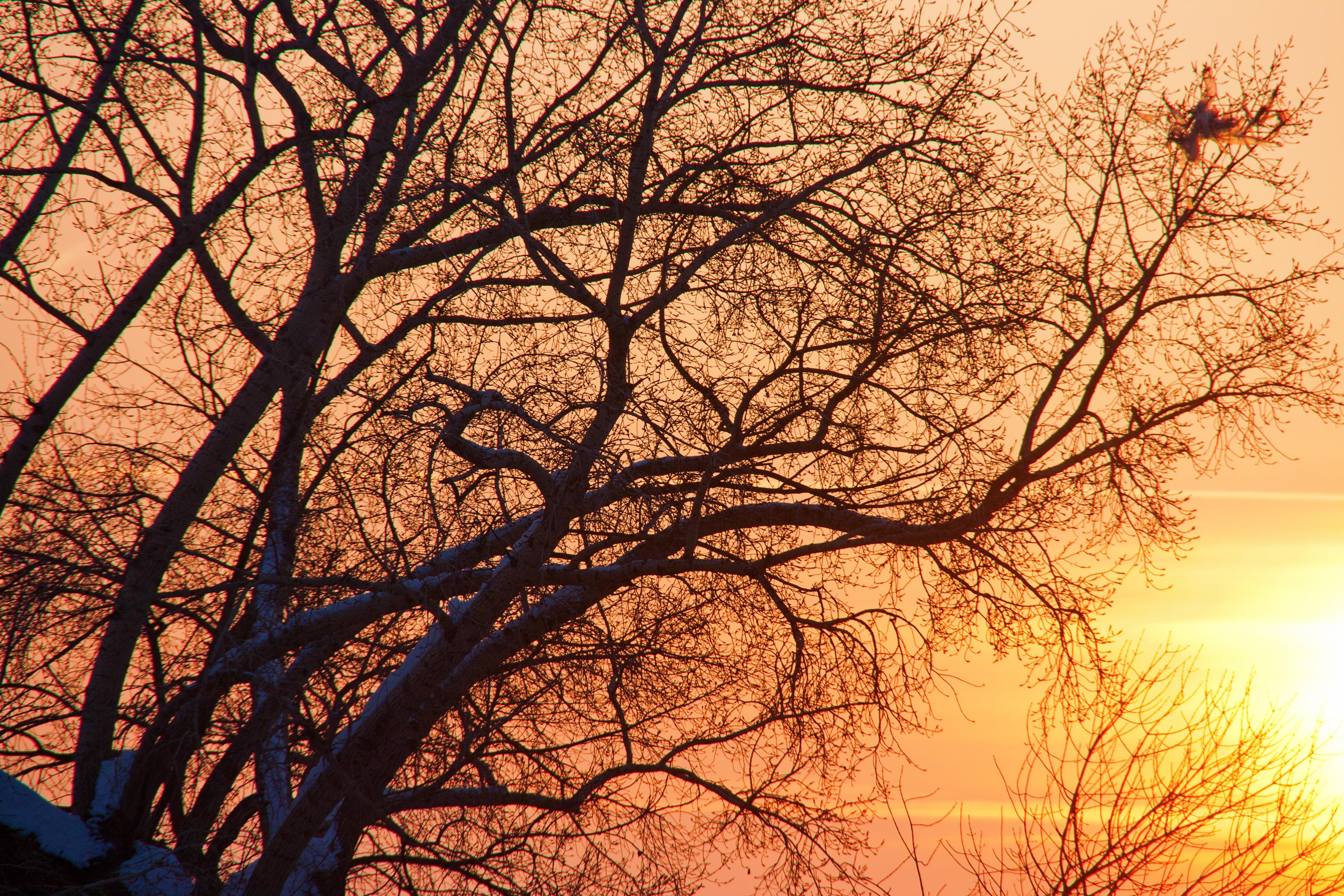Sunset, Red, Wood, Wild, Twilight, HQ Photo