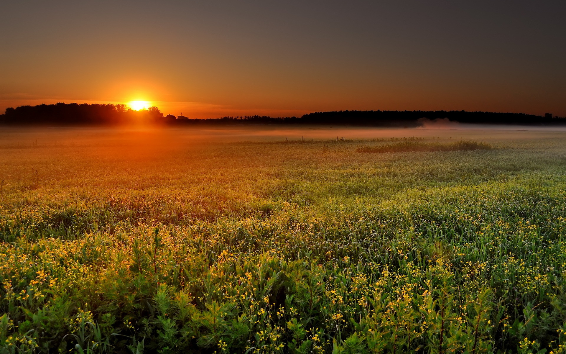 Sunset from the wild field / 1920 x 1200 / Sunriseandsunset ...