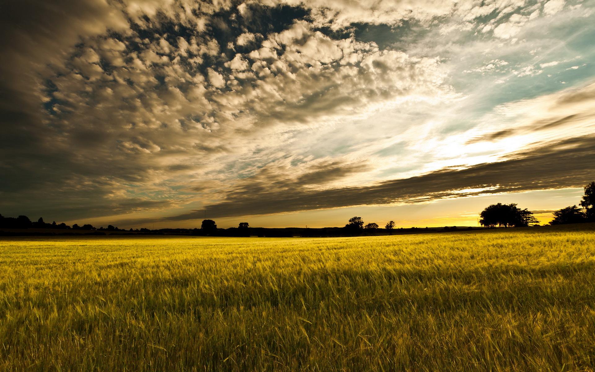 Yellow sunset over the field / 1920 x 1200 / Sunriseandsunset ...
