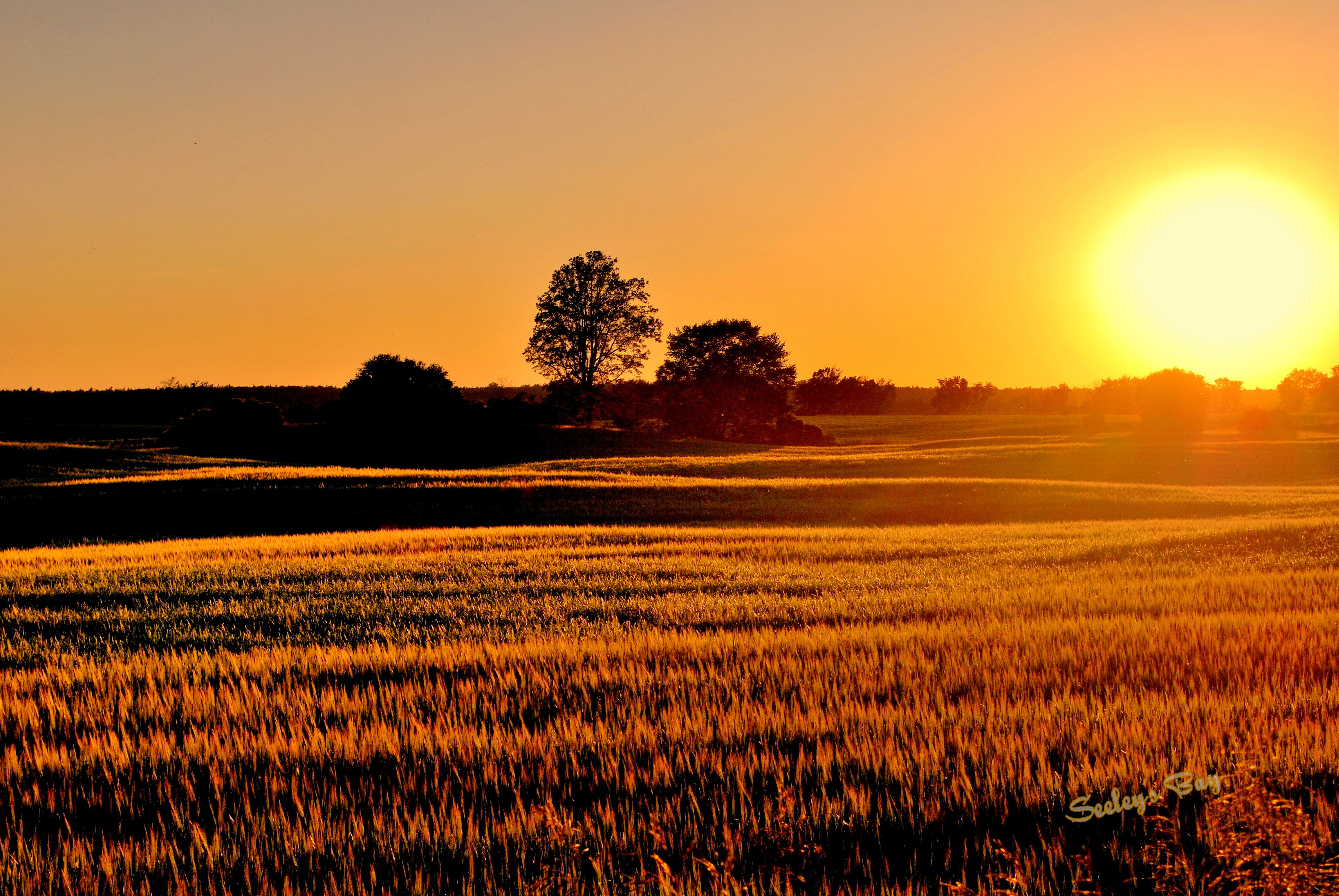 Sunset over farm fields in Seeley's Bay   Around my house ...