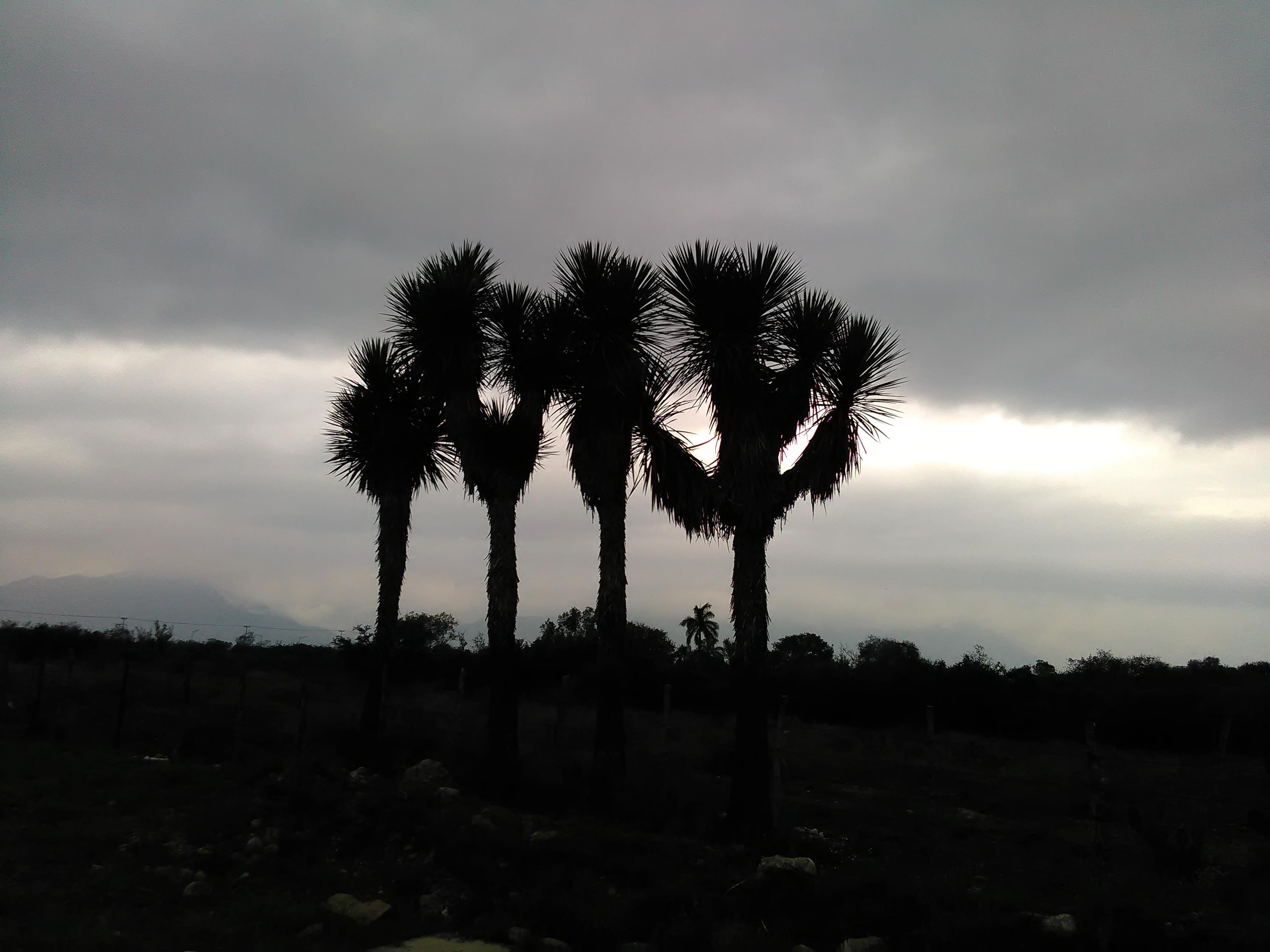 Sunset over joshua tree photo
