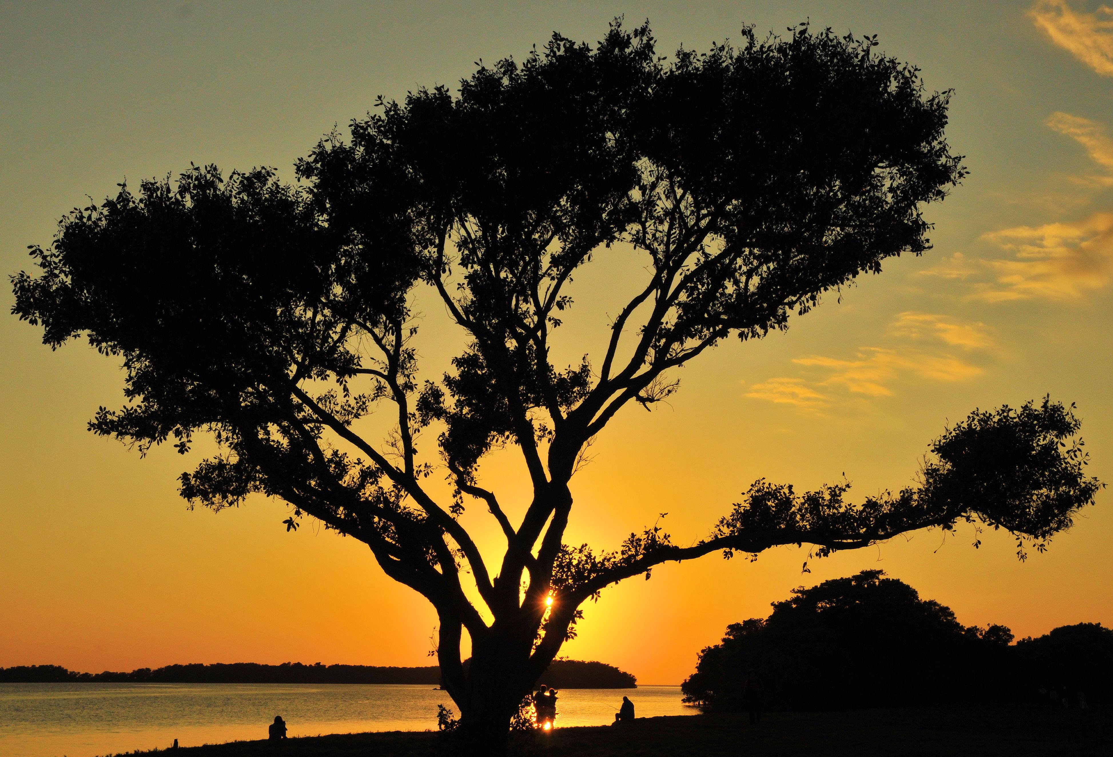 Sunset Shade, Everglades, Flamingo, Florida, Ocean, HQ Photo