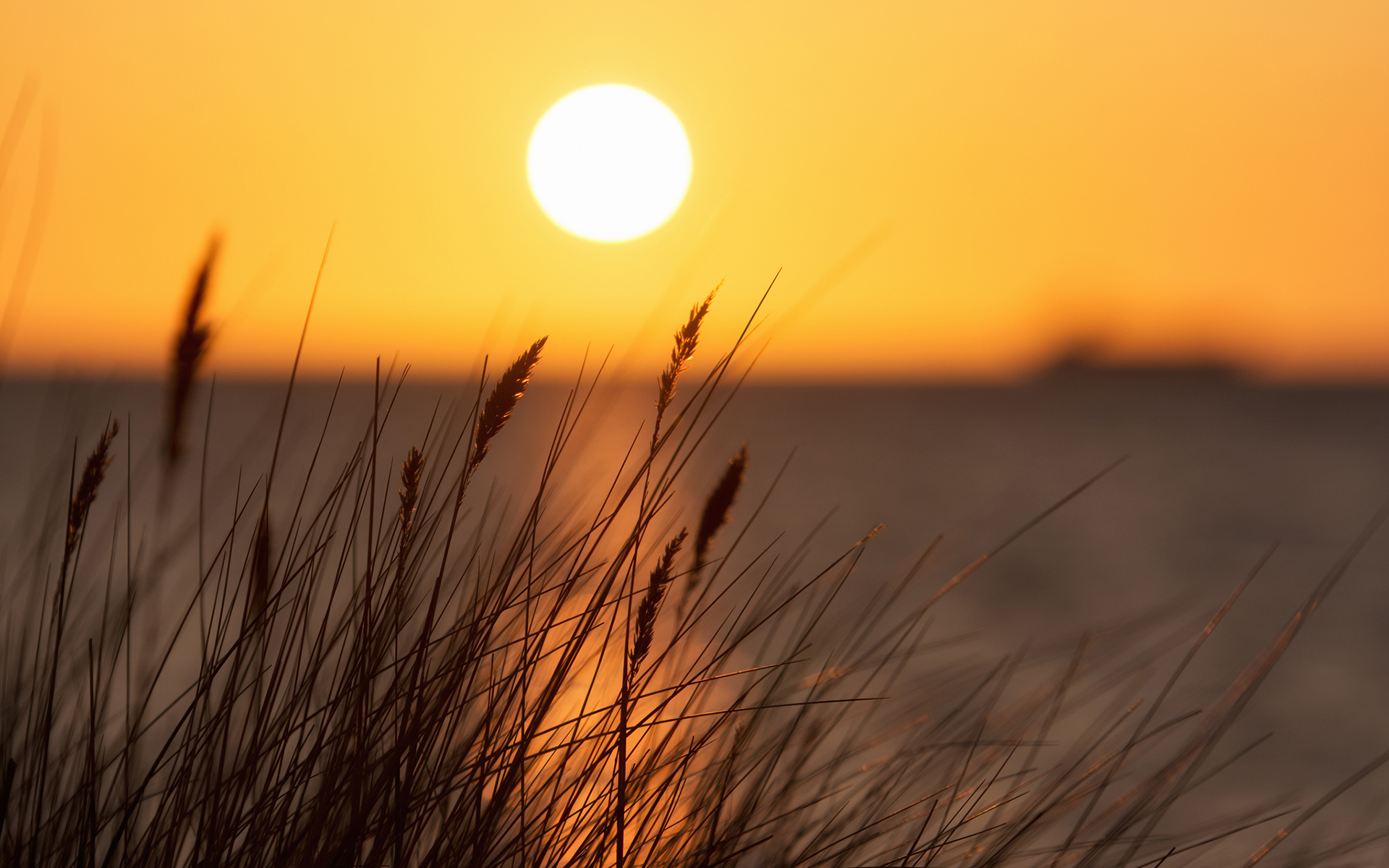 Sunset grass seascape wallpaper | 1920x1200 | #32144
