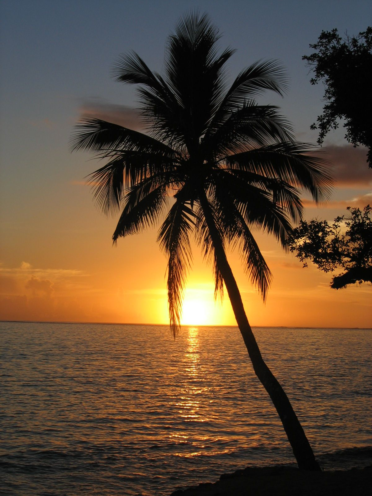 coconut palm tree - fiji | Gods creation | Pinterest | Palm, Sunset ...
