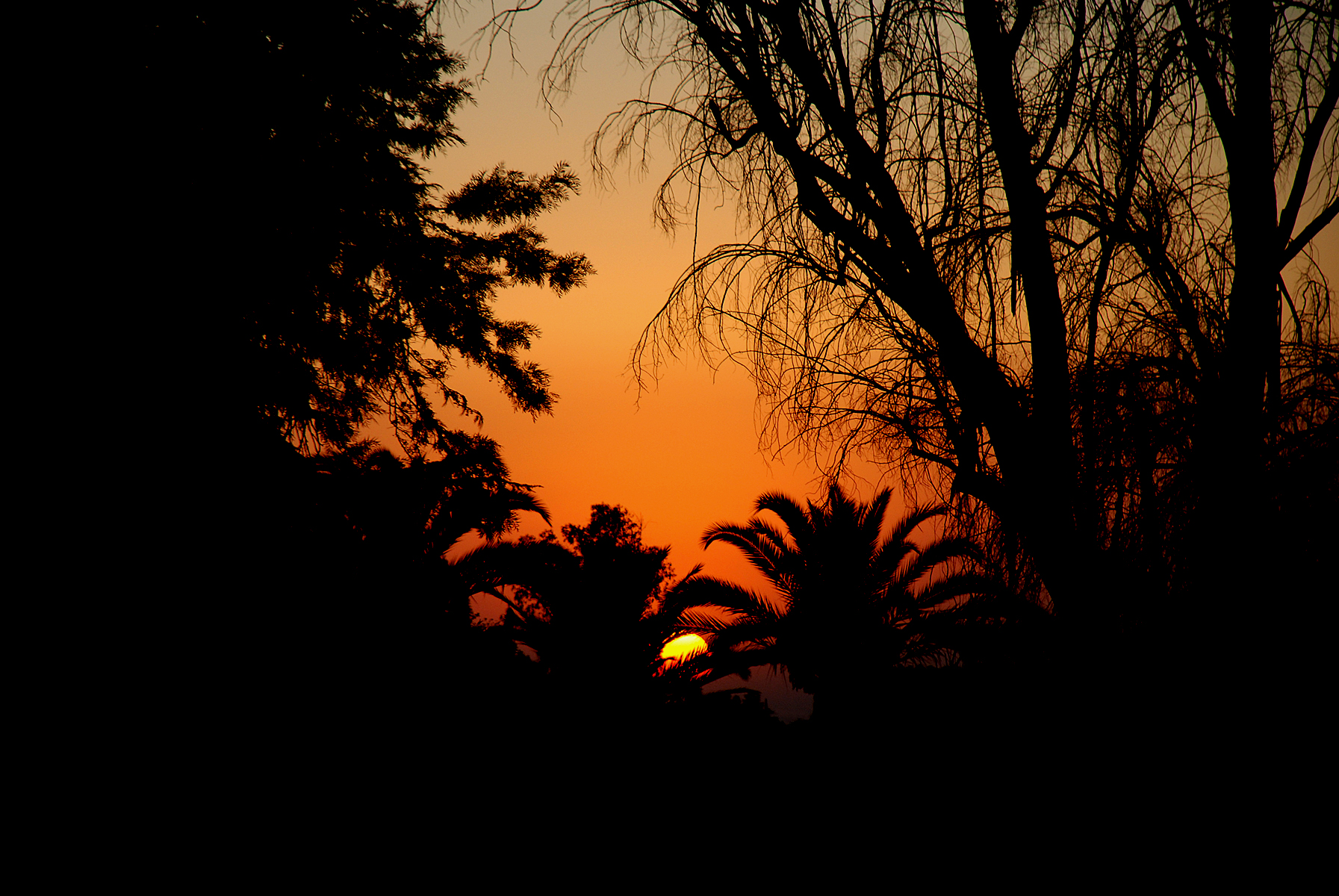 Sunset Through Palms, Black, Bspo06, Dusk, Orange, HQ Photo