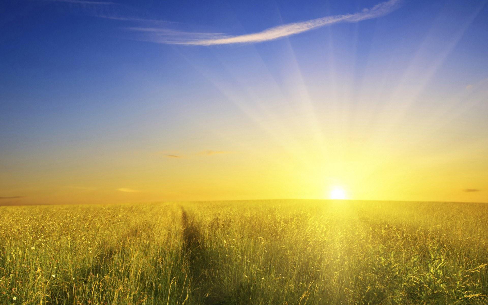 Sunshine field photo