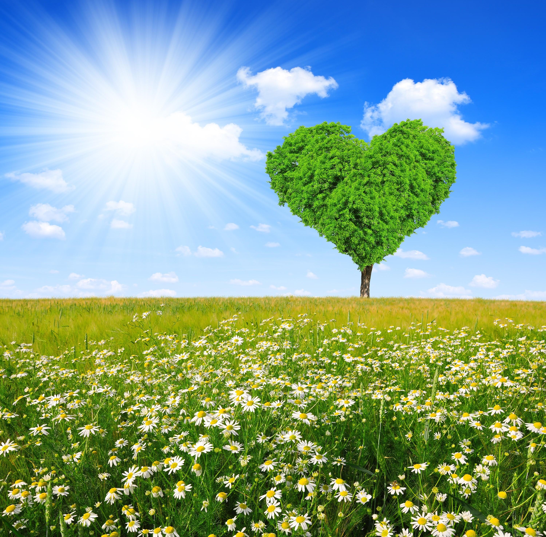 Fields: Love Tree Daisy Heart Sunshine Field Spring Green Fields ...