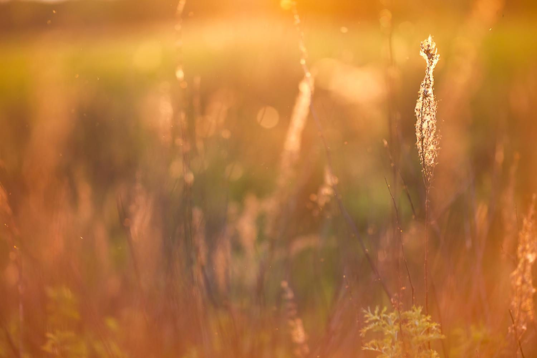Sunshine field, Autumn, Natural, Wallpaper, Sunshine, HQ Photo