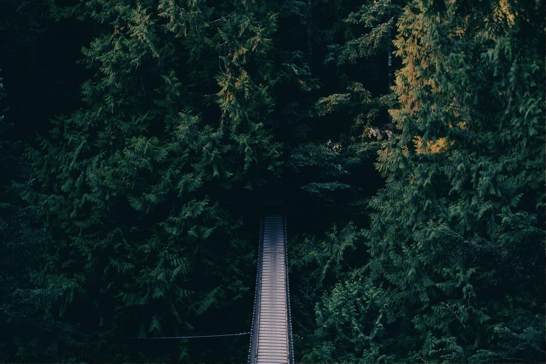 Suspension Bridge, Bridge, Forest, Greenery, Nature, HQ Photo
