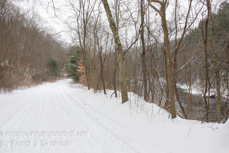 Susquehanna forest blizzard photo