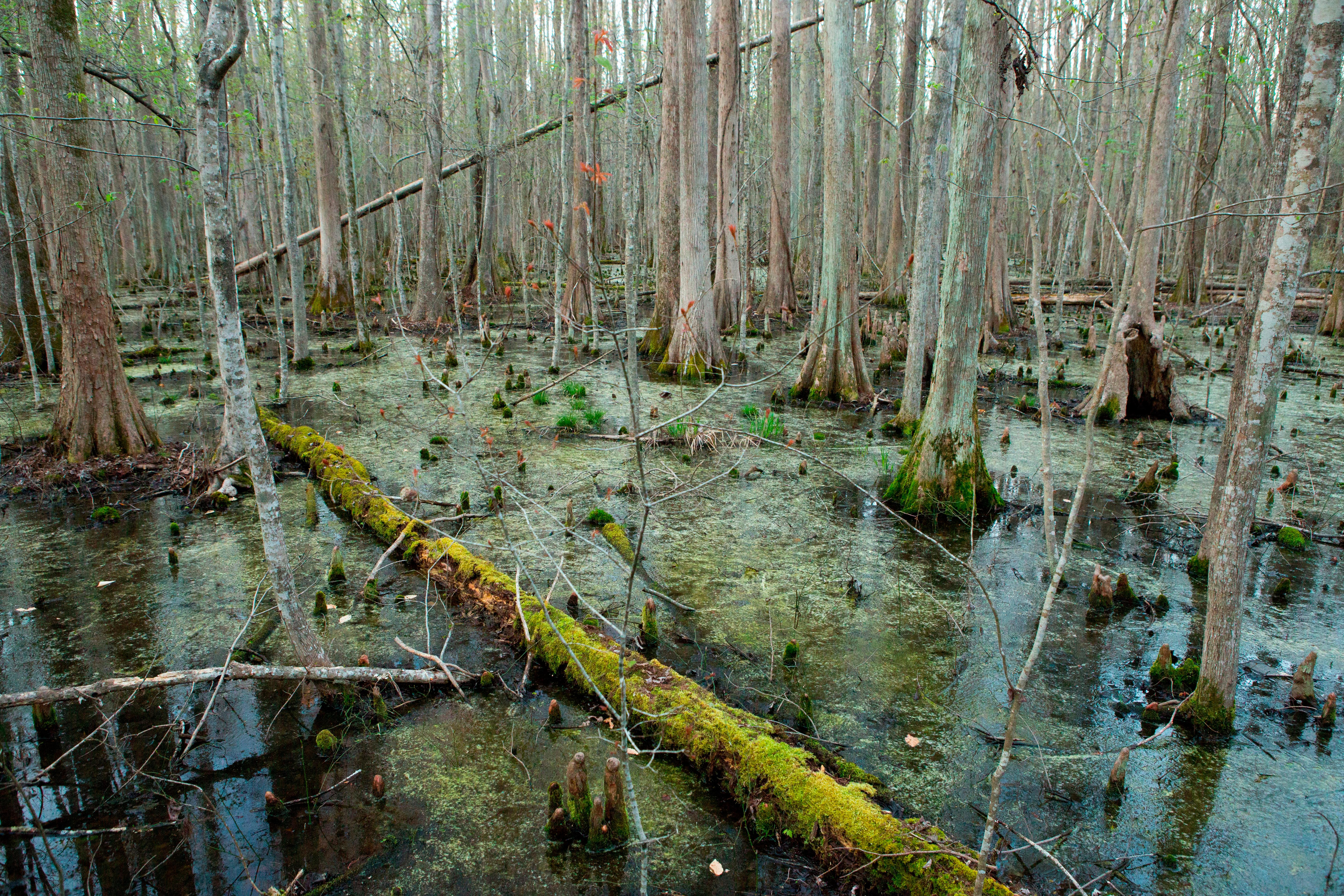Deep in the Swamps, Archaeologists Are Finding How Fugitive Slaves ...