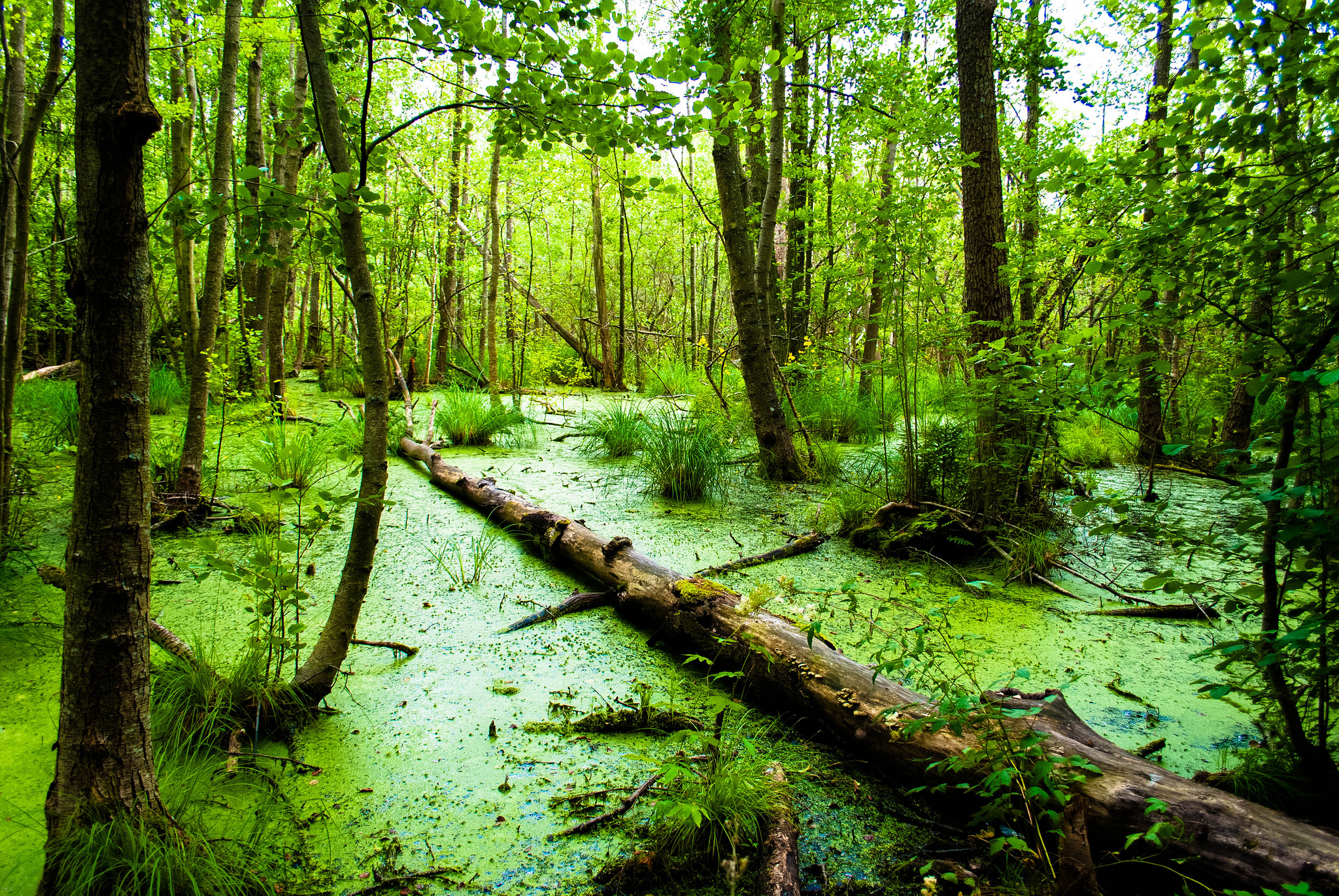 84 Swamp HD Wallpapers | Background Images - Wallpaper Abyss