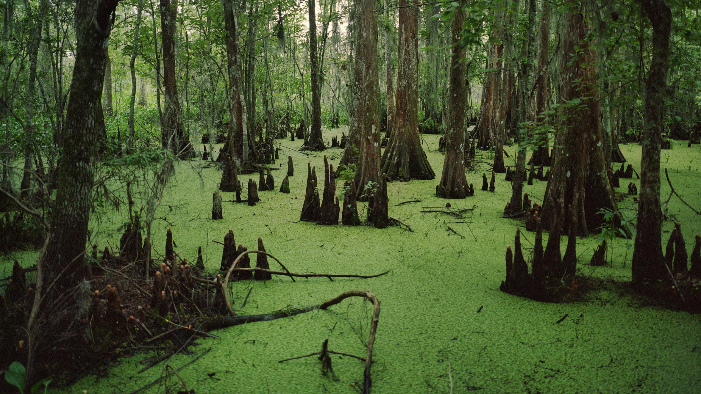 Drain the swamp | TechCrunch