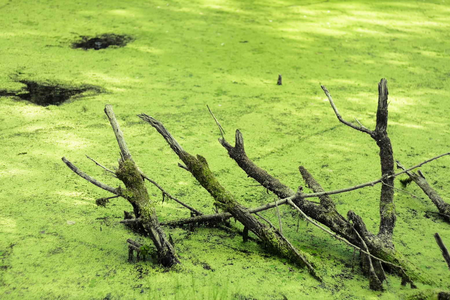 swamp, Beauty, Smooth, Spring, Stick, HQ Photo