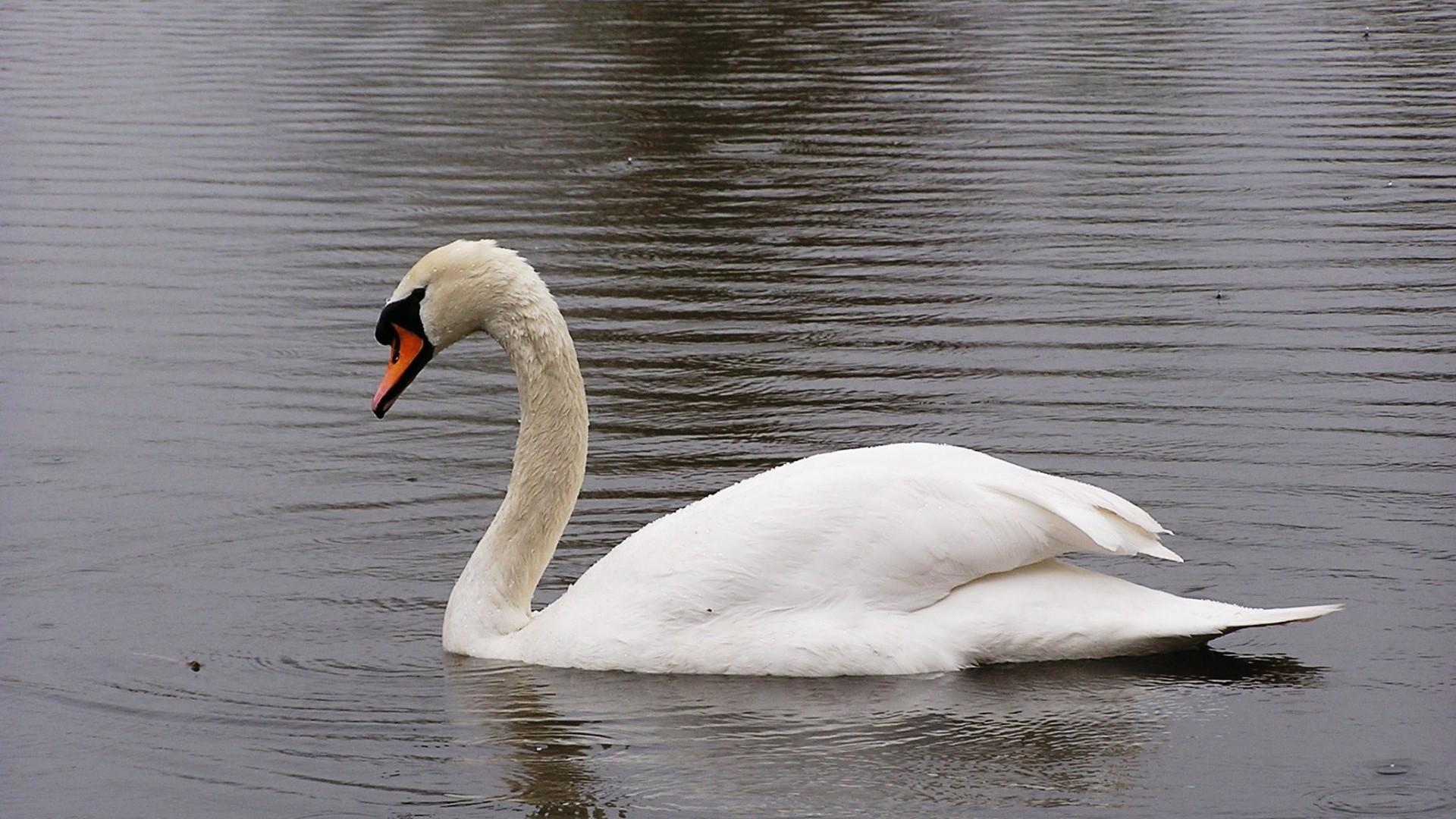 free photo swan statue bird sculpture free download jooinn