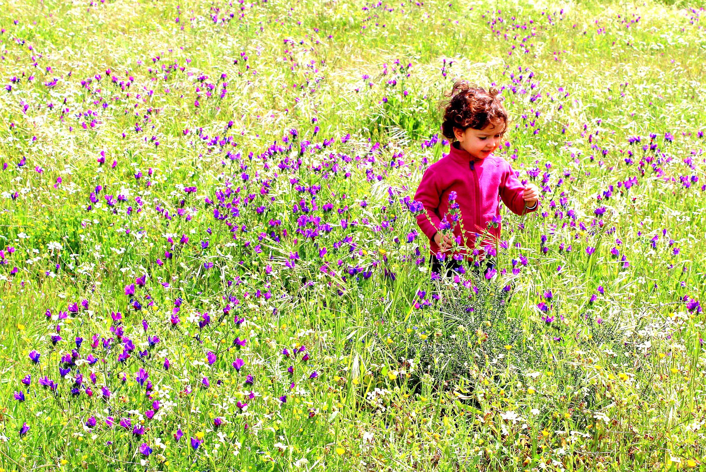 Free Photo Sweet Little Child In A Meadow With Wild Purple Spring