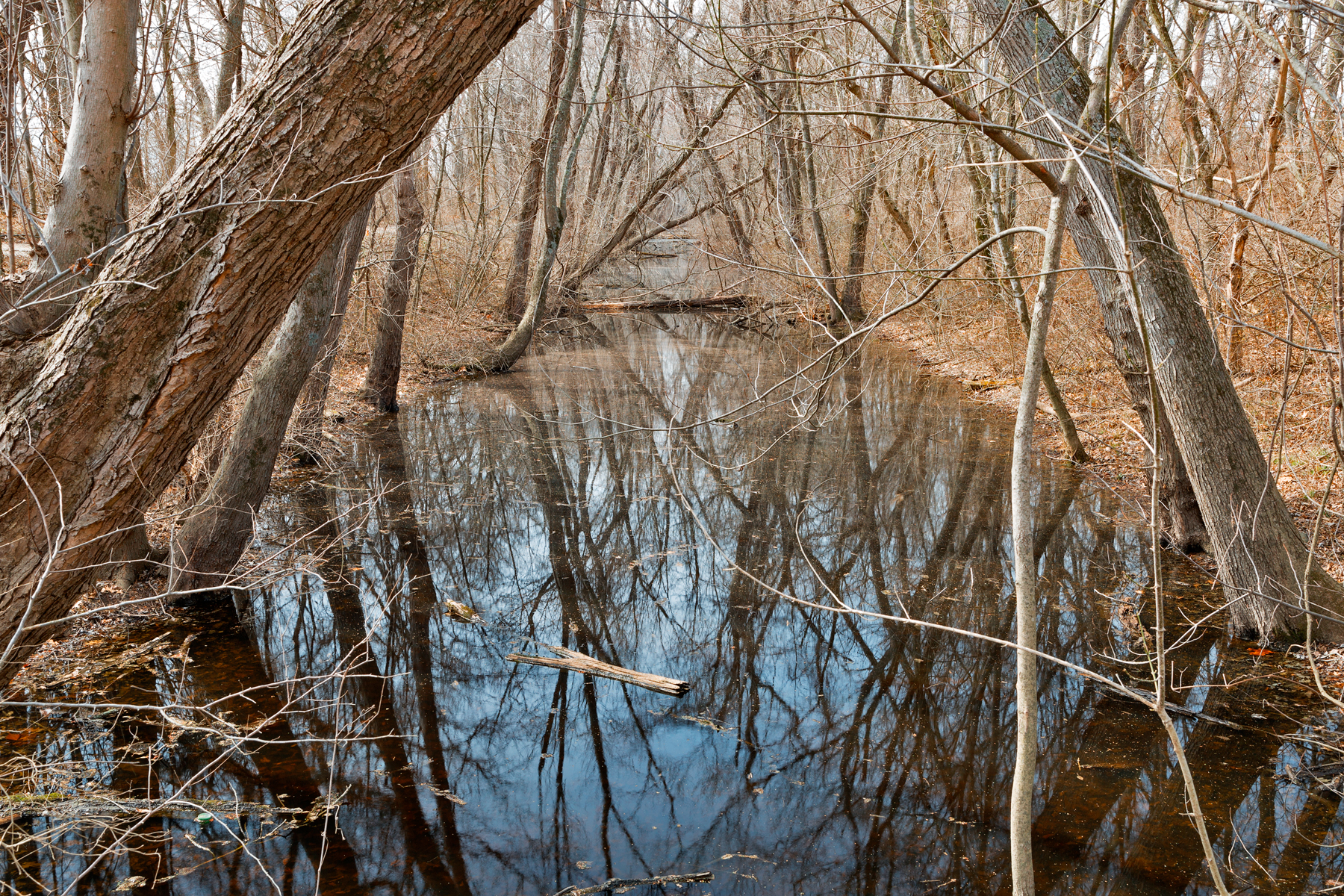 Sycamore landing creek photo