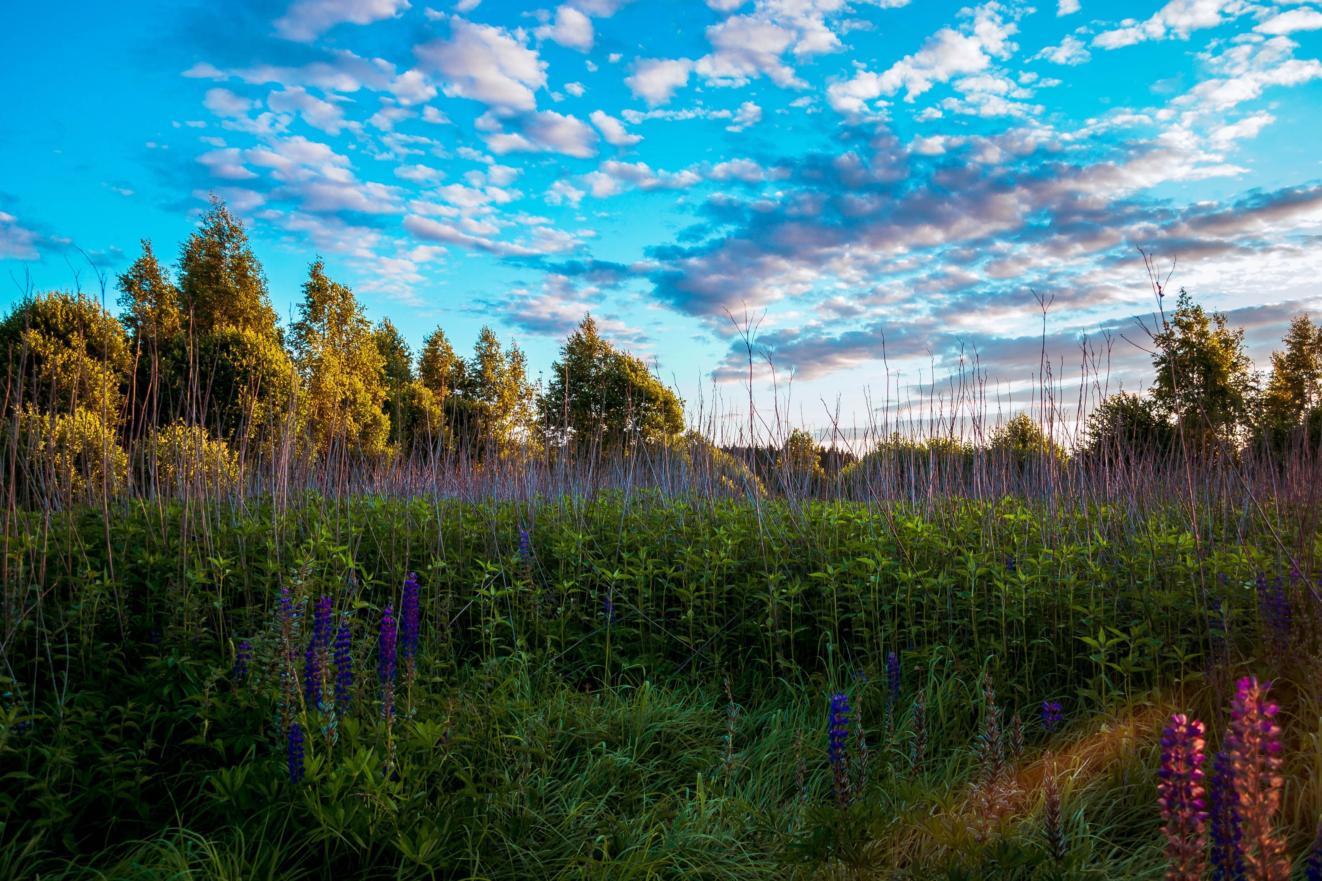 Tall trees and grasses photo