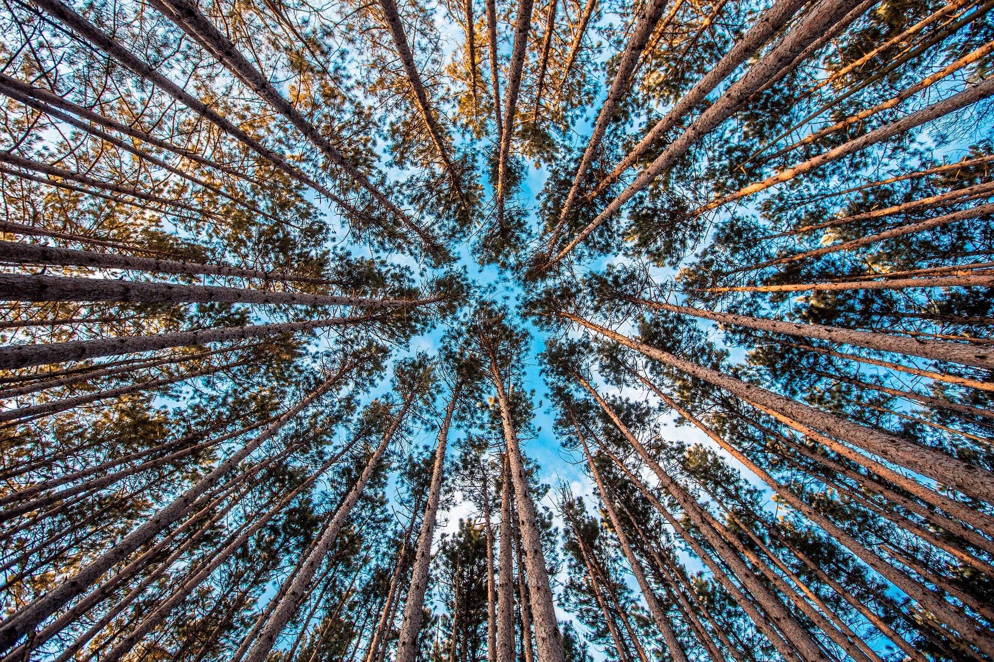 Tall Trees, Tall, Wood, Tree, Jungle, HQ Photo
