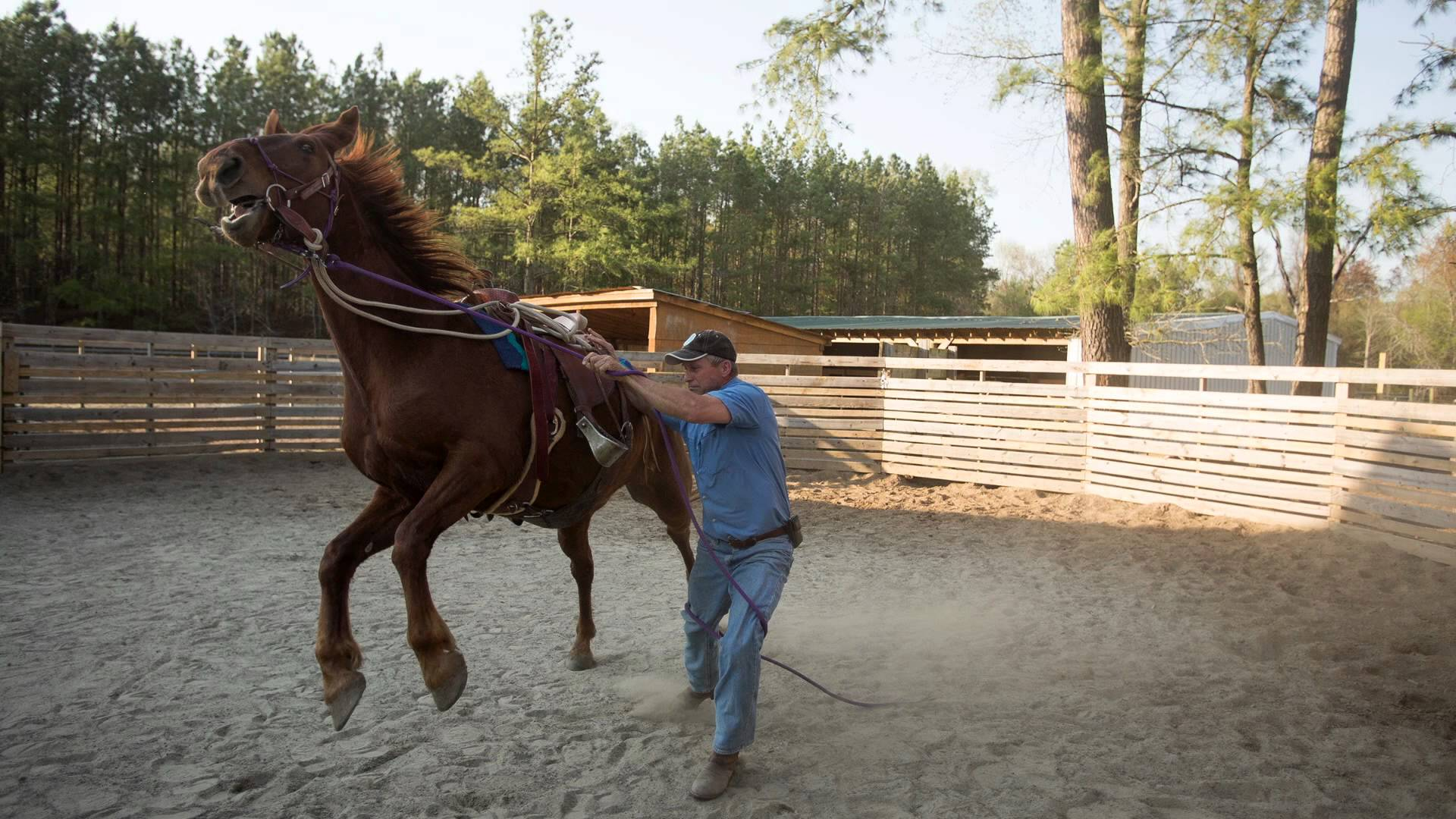 Taming a horse photo